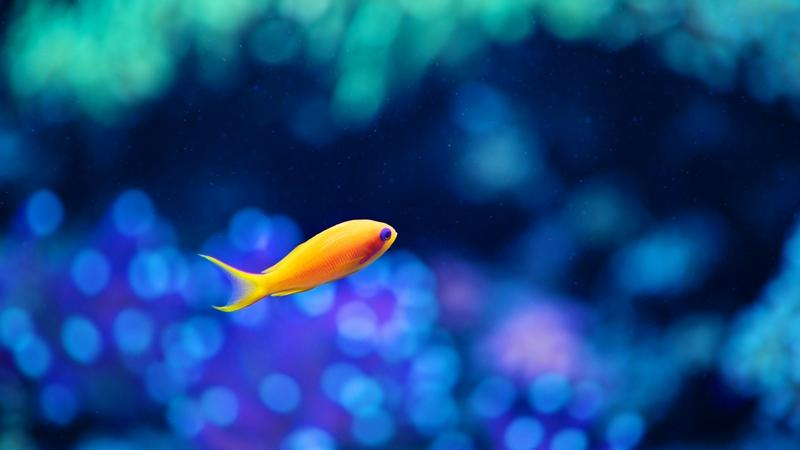 aquarium underwater 2560x1440 wallpaper blueocean blue ocean fish 800x450