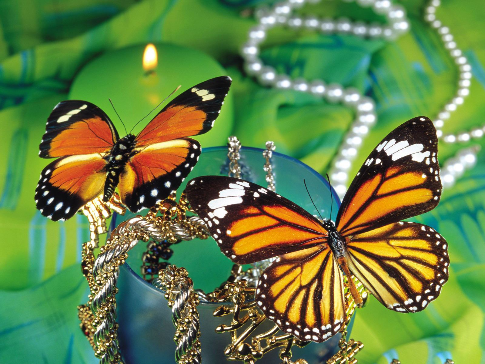 Monarch Butterflies   Desktop Wallpapers 1600x1200