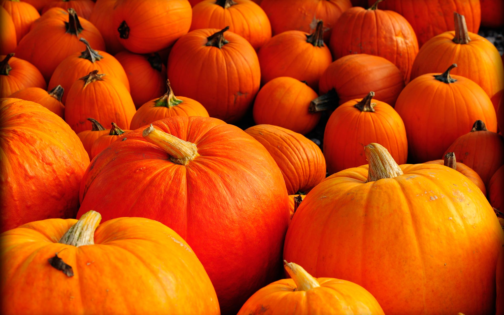 Fall wallpaper backgrounds with pumpkins wallpapersafari - Fall wallpaper pumpkins ...