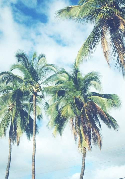 palm tree background tumblr palm trees blowing jpg 500x713