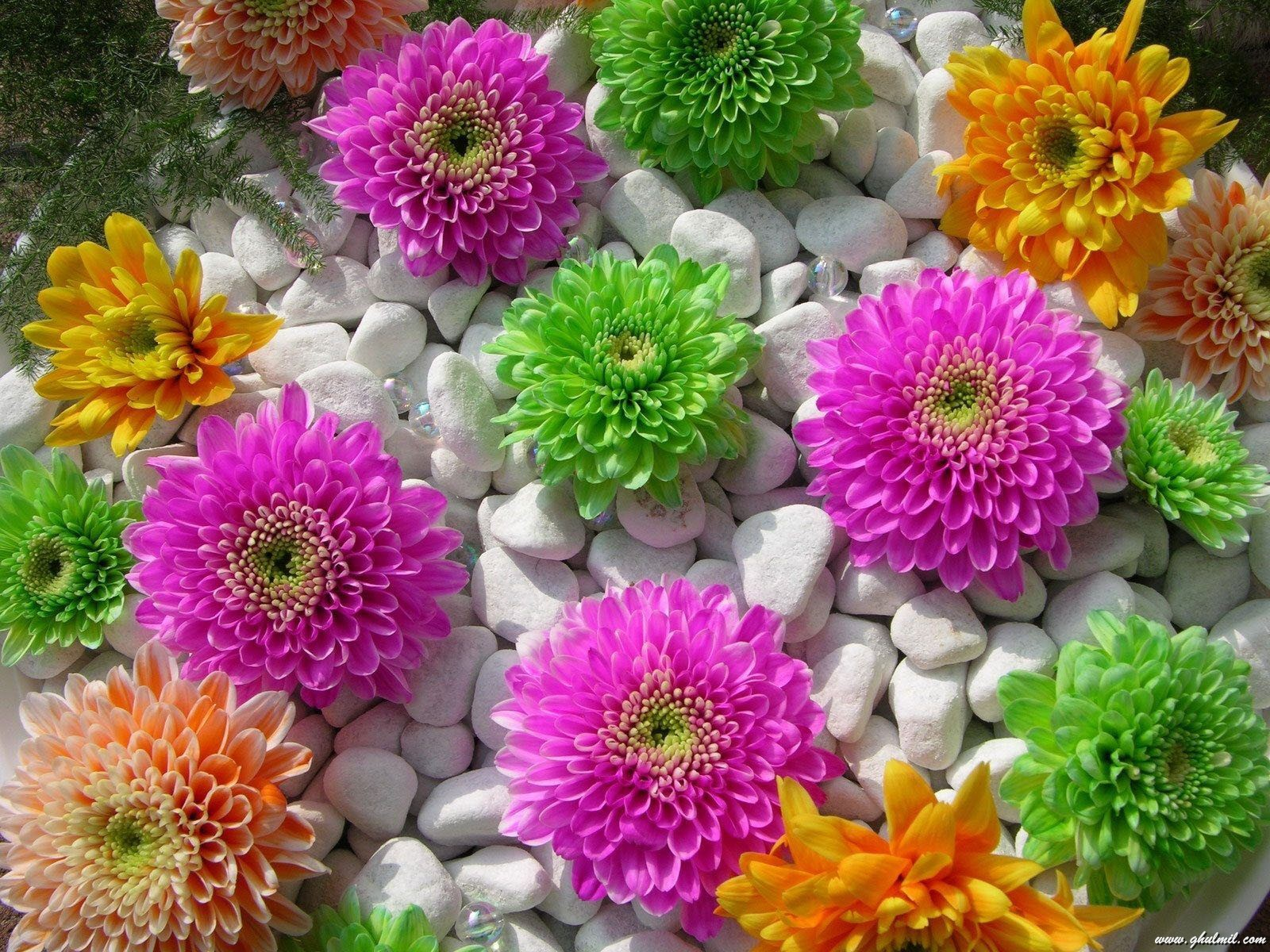Download Beautiful Superb Flowers Wallpaper Full HD Wallpapers 1600x1200
