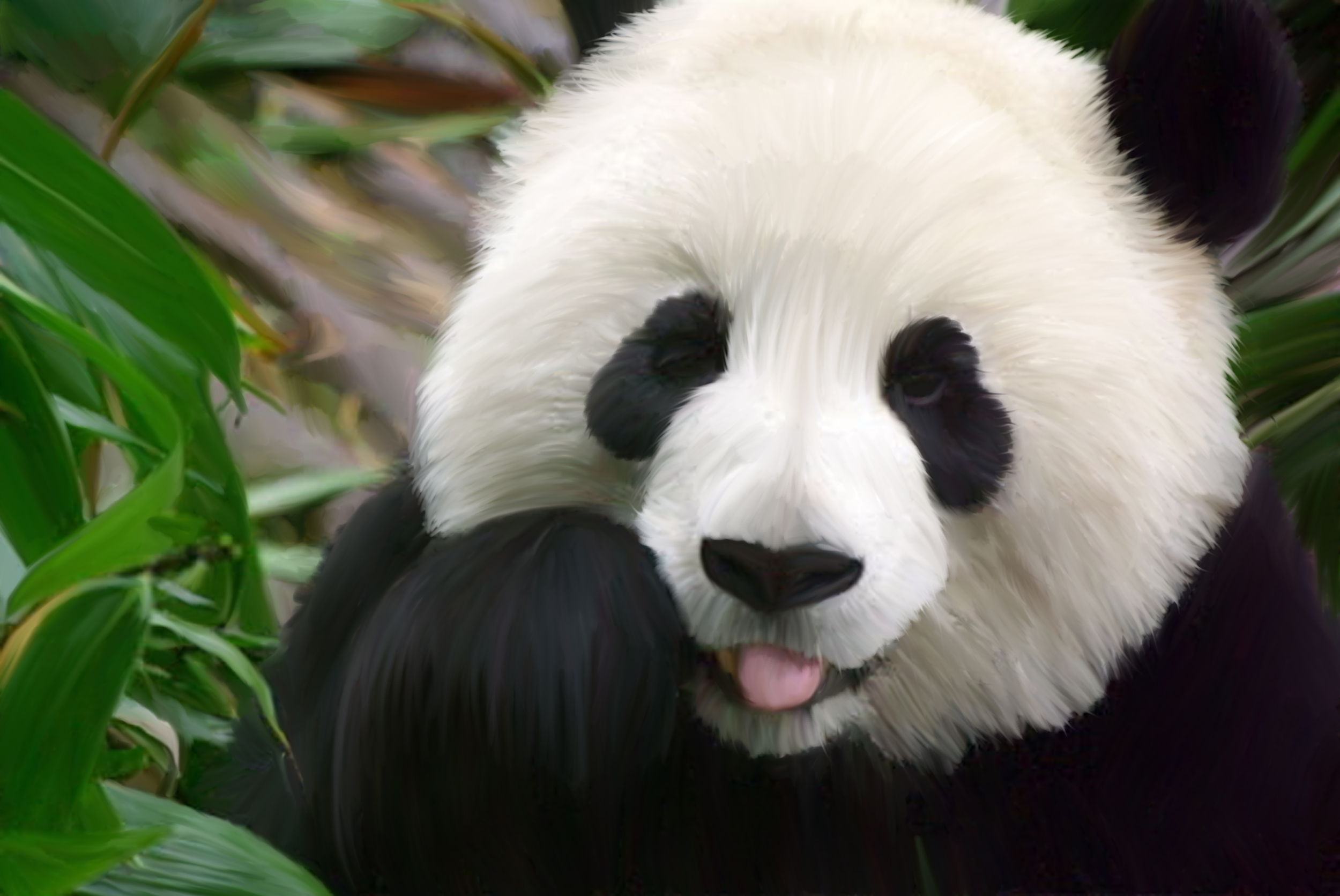 Cute Panda HD Wallpaper Animals Wallpapers 2500x1671