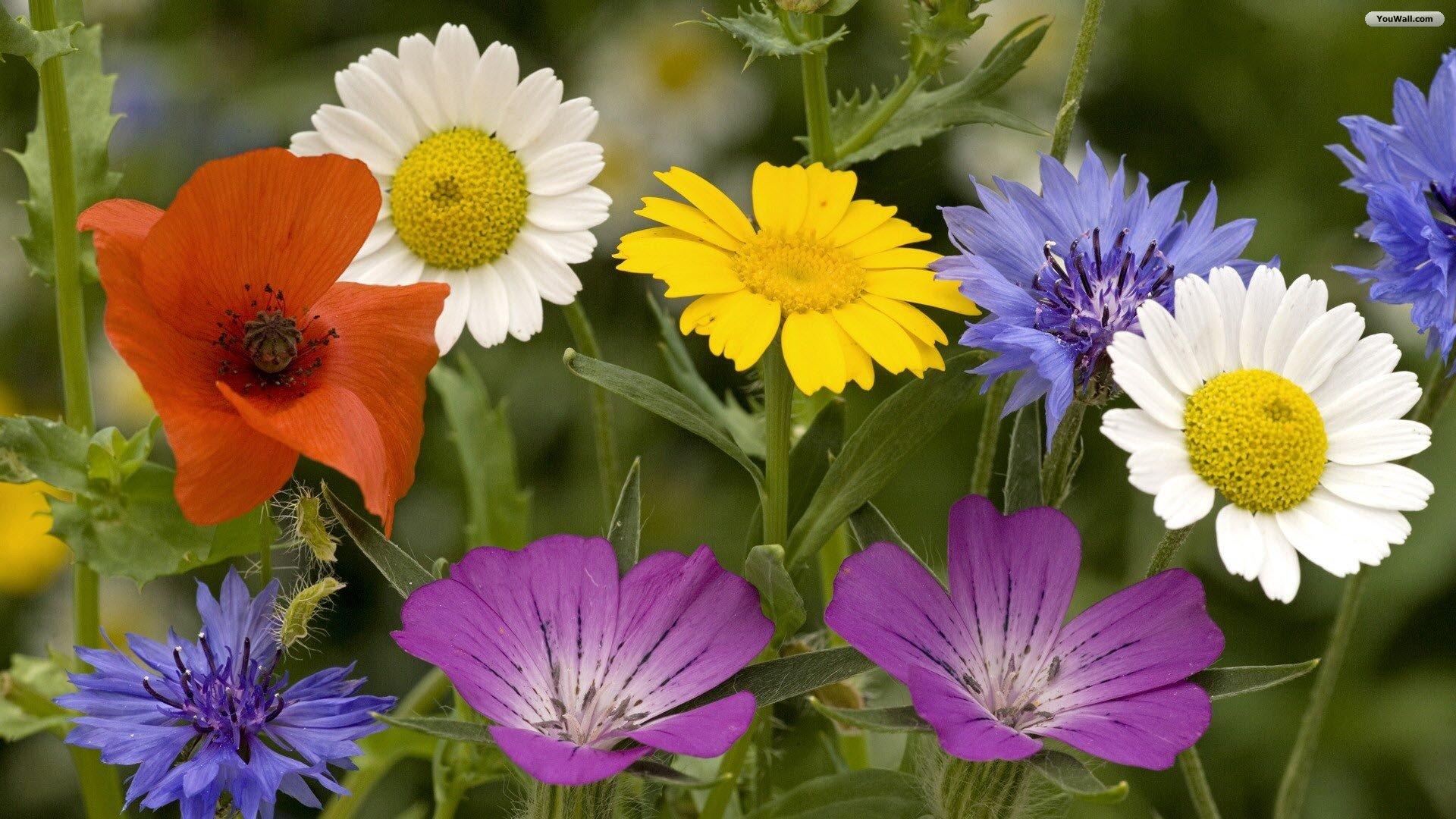 Springtime pictures for desktop