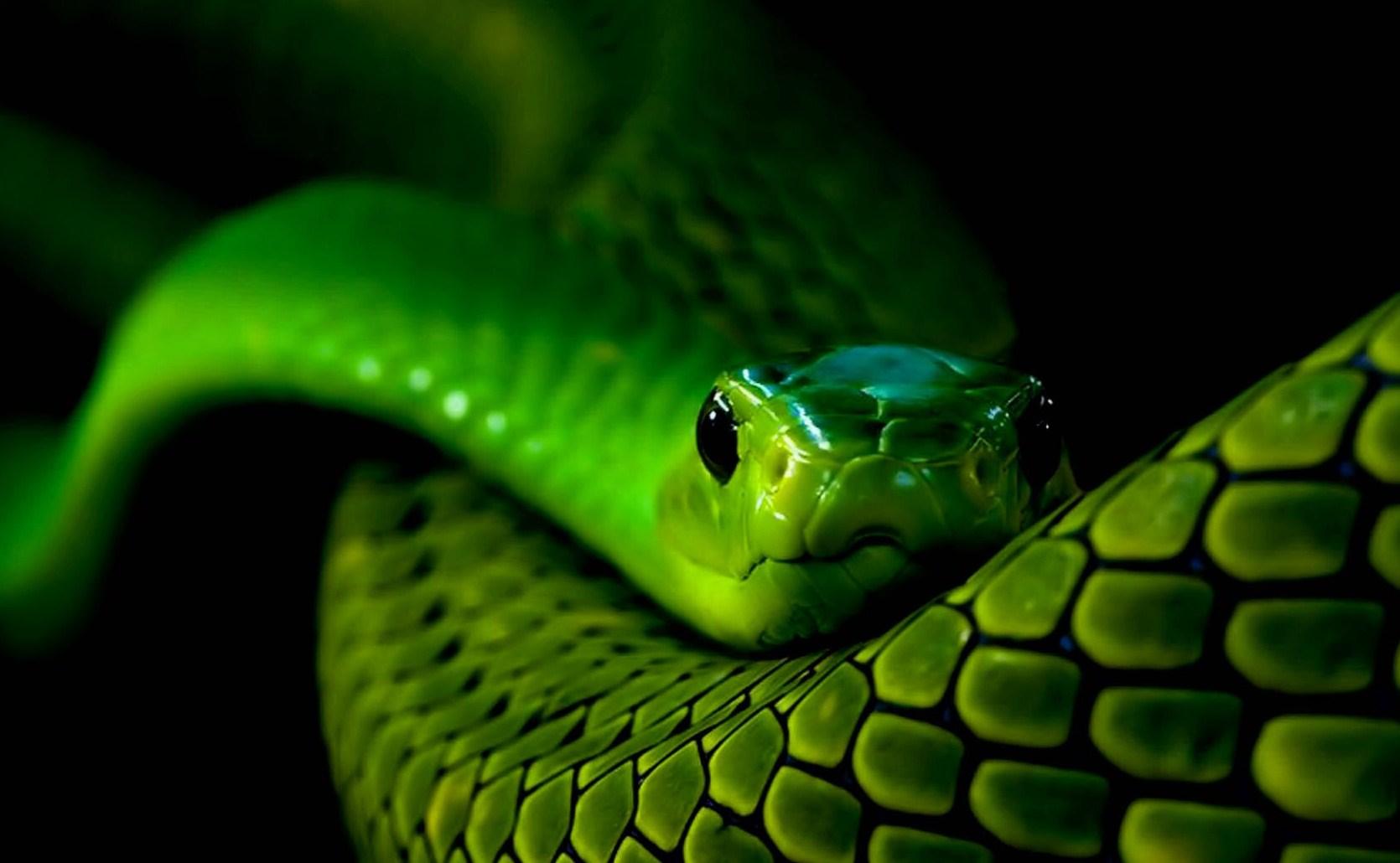 Snake Eyes Wallpaper   ForWallpapercom 1670x1030