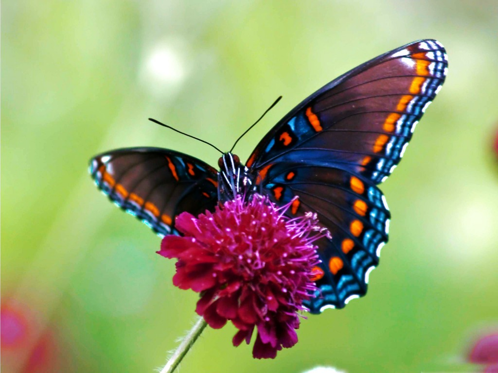 Colorful Butterfly Backgrounds 46 Cool Wallpaper   Hivewallpapercom 1024x768