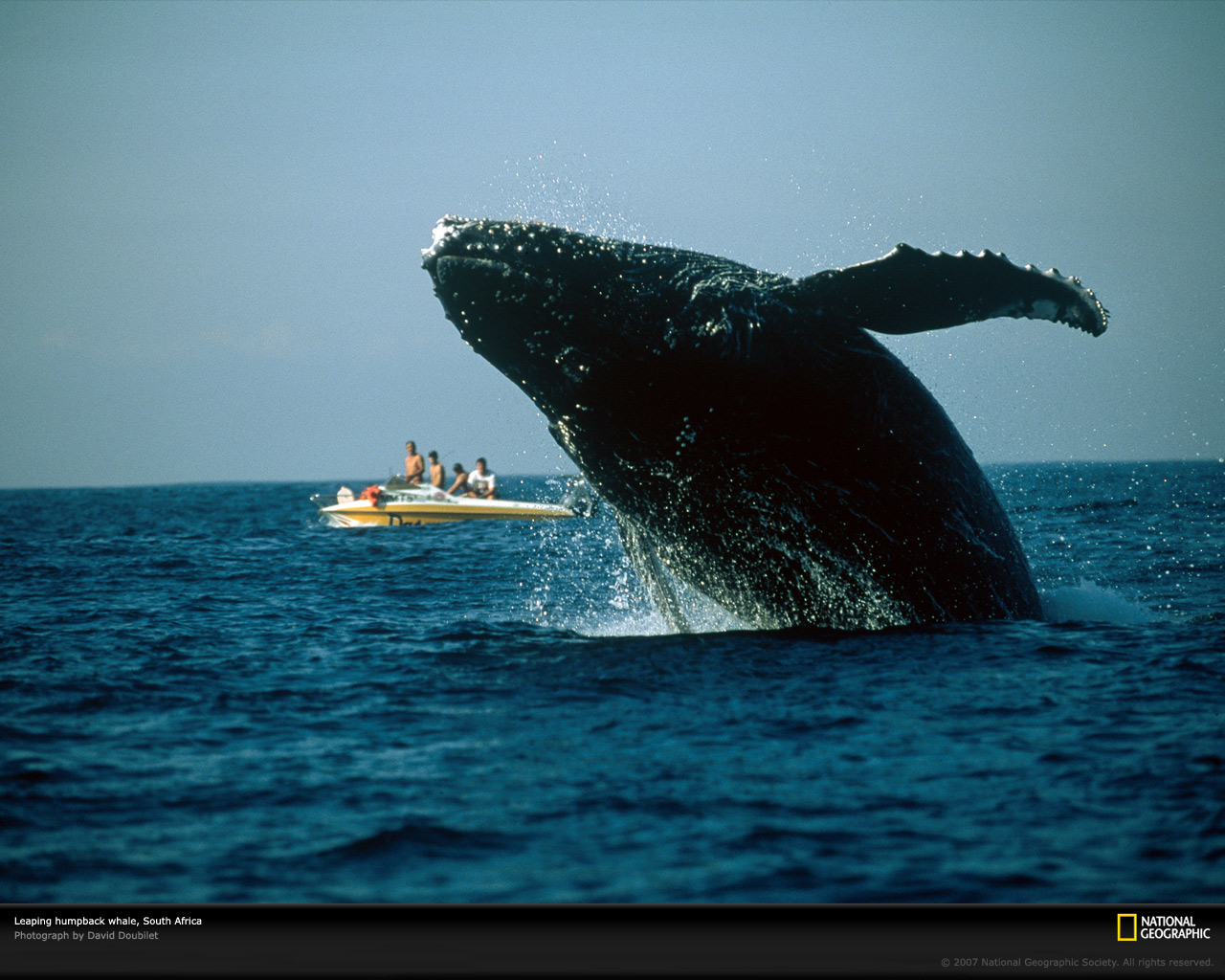 Humpback Whale Photo of the Day Picture Photography Wallpapers 1280x1024