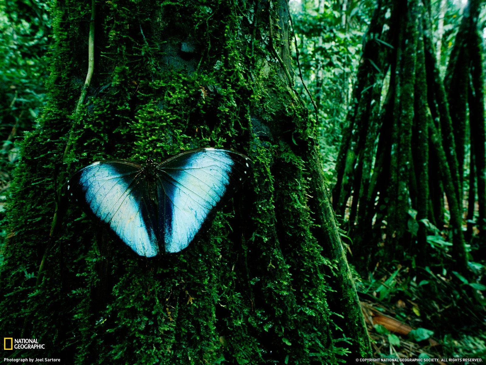 Rainforest High Definition Desktop Wallpapers HD Nature Wallpapers 1600x1200