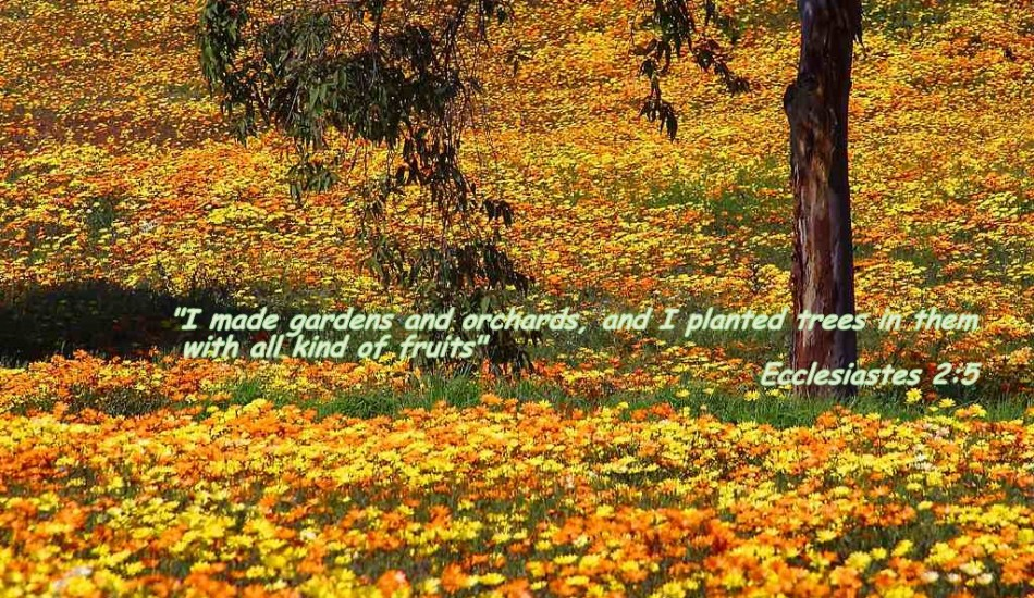 Christian Screensavers With Bible Verses | The Word | Pinterest ...