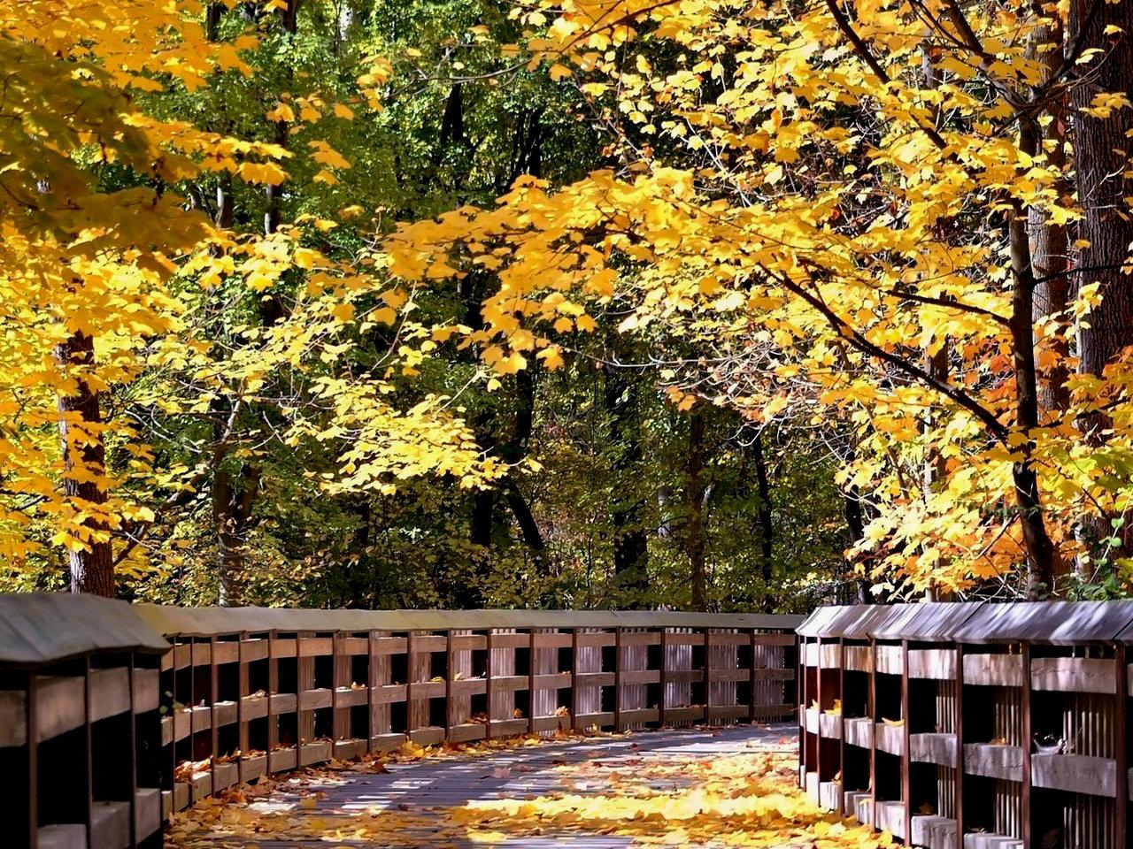 49 Fall Scenes Wallpaper Free On Wallpapersafari