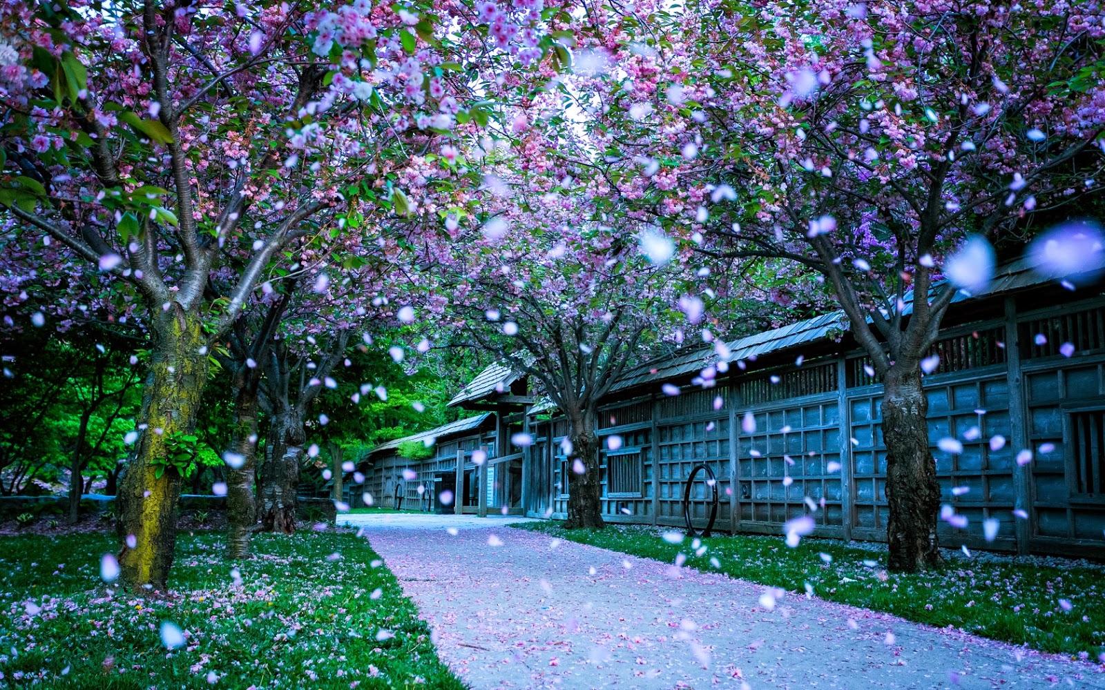Beautiful Snow Fall Wallpaper Mobile wallpapers 1600x1000