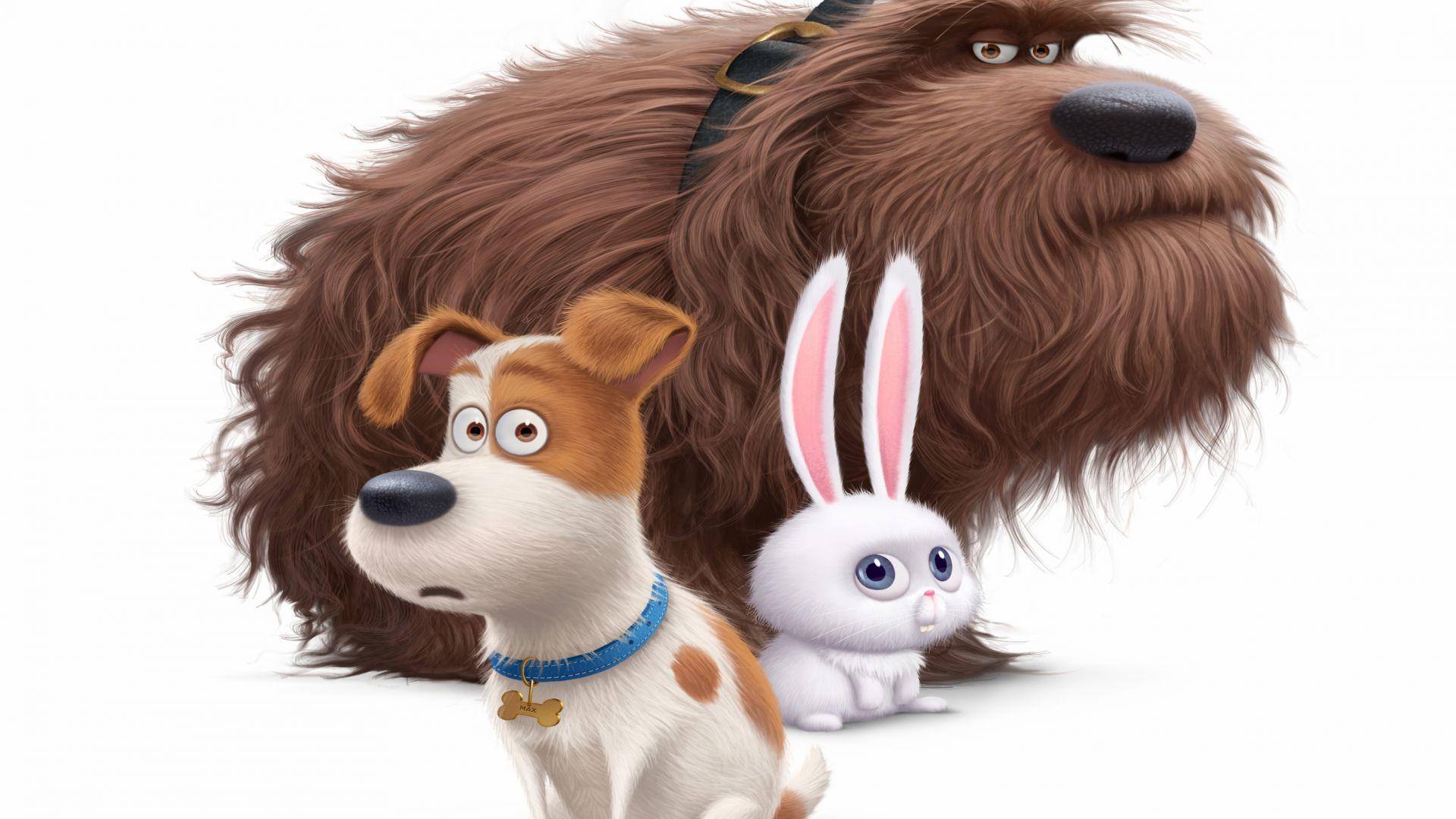 The Secret Life of Pets Wallpaper Movies Animation The Secret Life 1920x1080