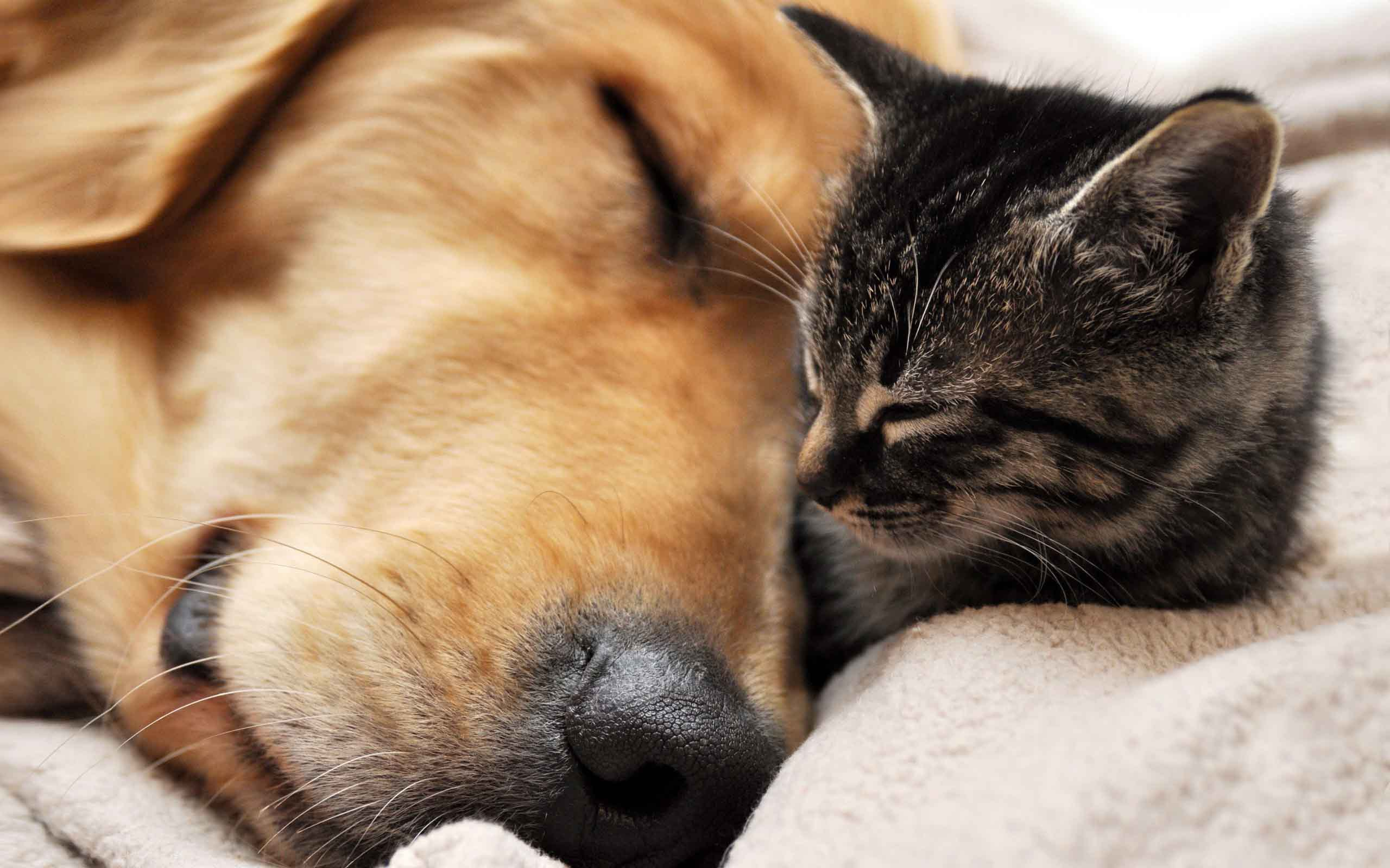Cat and dog sleeping wallpapers and images   wallpapers pictures 2560x1600