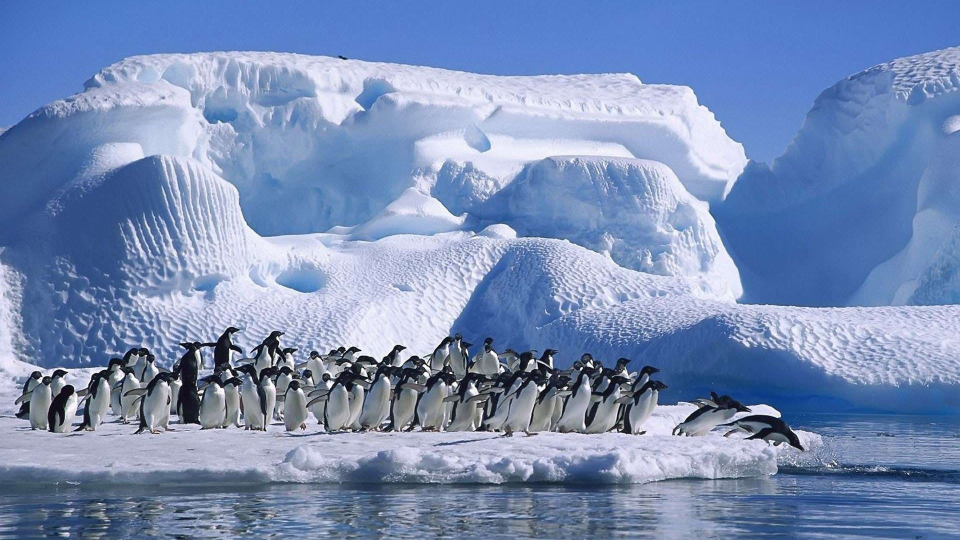 Adelie Penguins Antarctic Coast HD Wallpaper   Wallpaper Stream 1920x1080