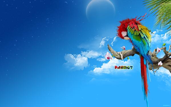 Full HD Wallpaper   Animals Birds Blue Clouds Palm leafs Parrots 600x375