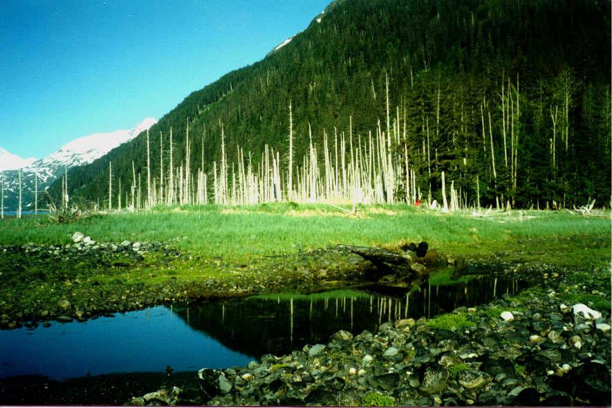 Alaska Sceneryj7jpg 885x590