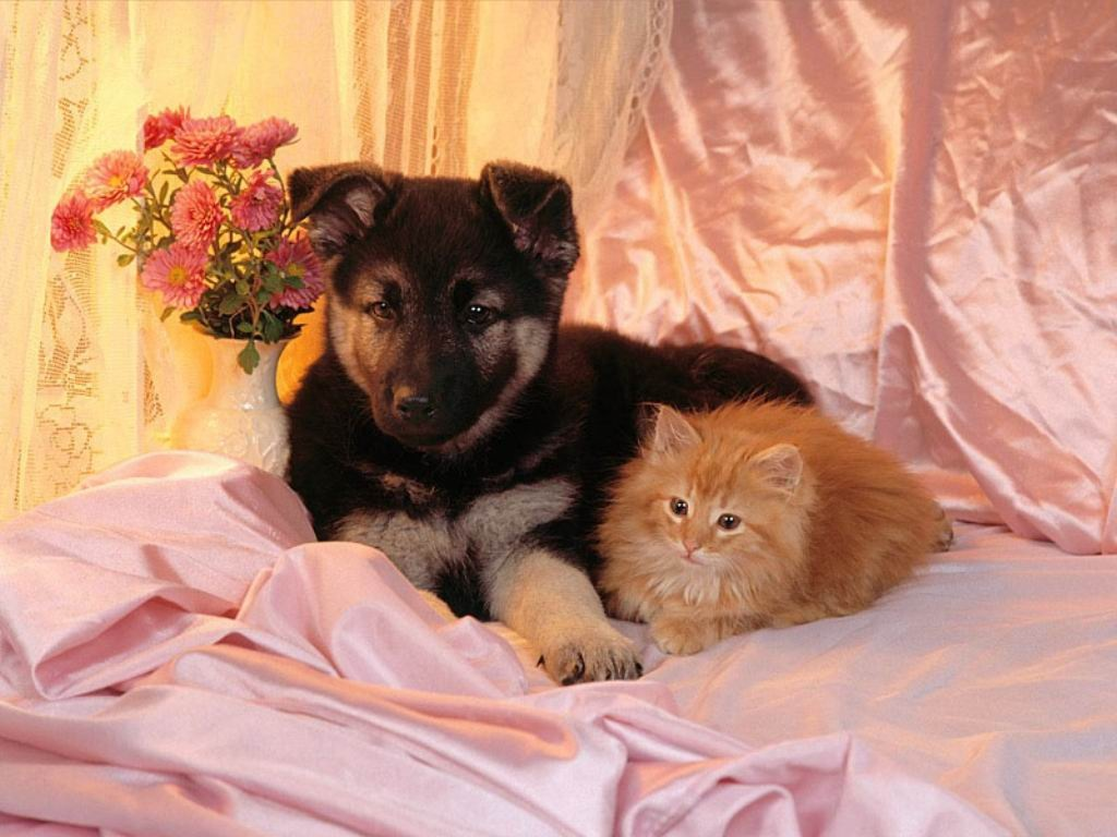 Cats and Dogs Wallpapers Fun Animals Wiki Videos 1024x768