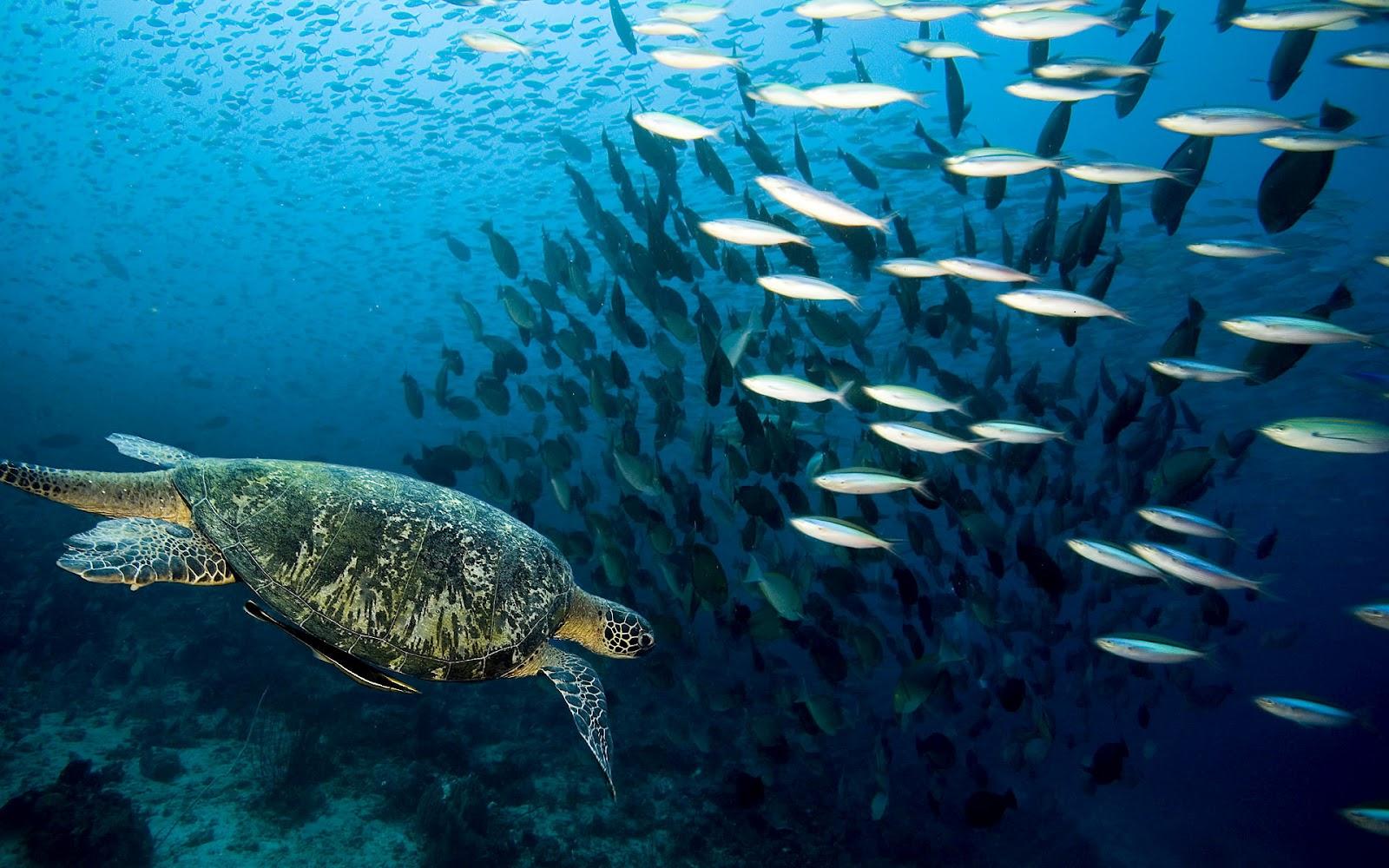 ocean life desktop wallpaper wallpapersafari