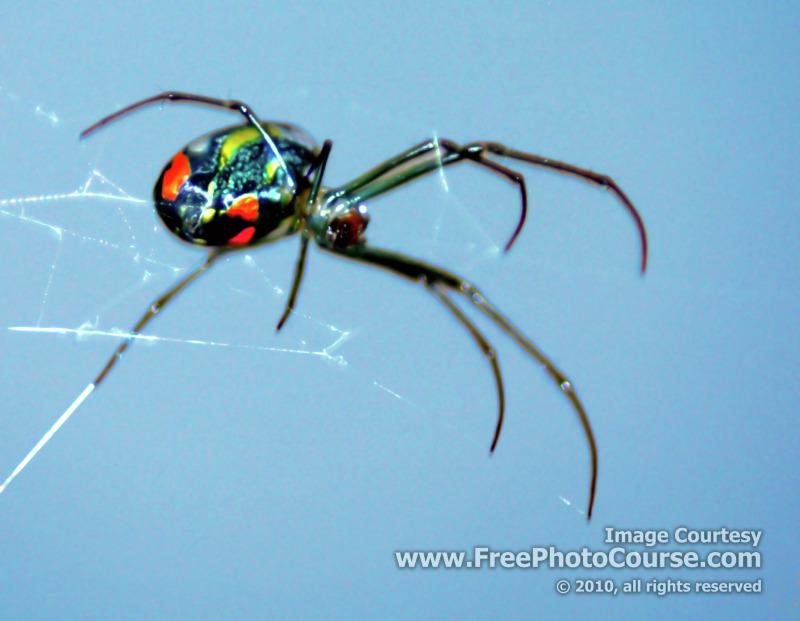 Black Widow Spider Wallpaper Black Widow Spider 800x621