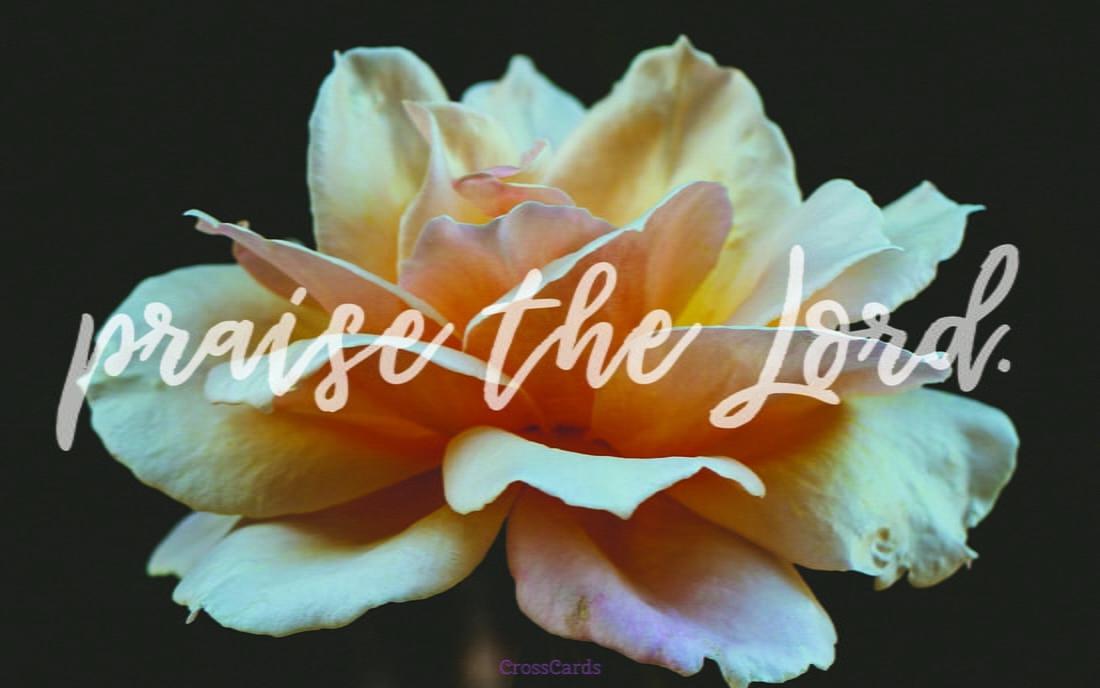 Beautiful Flowers Desktop Mobile Wallpaper Backgrounds 1100x688