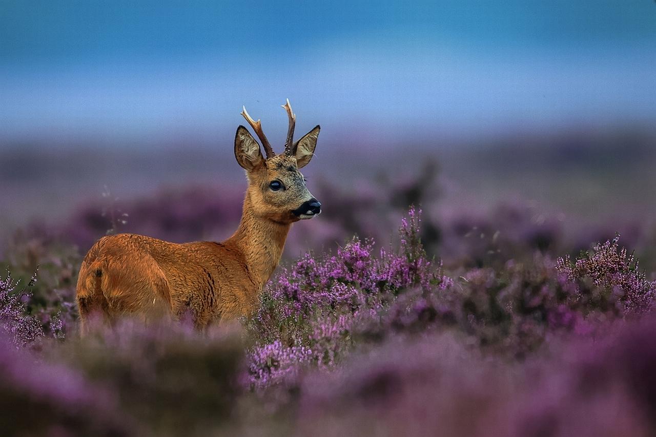 deer Wallpaper Background 3129 1280x853