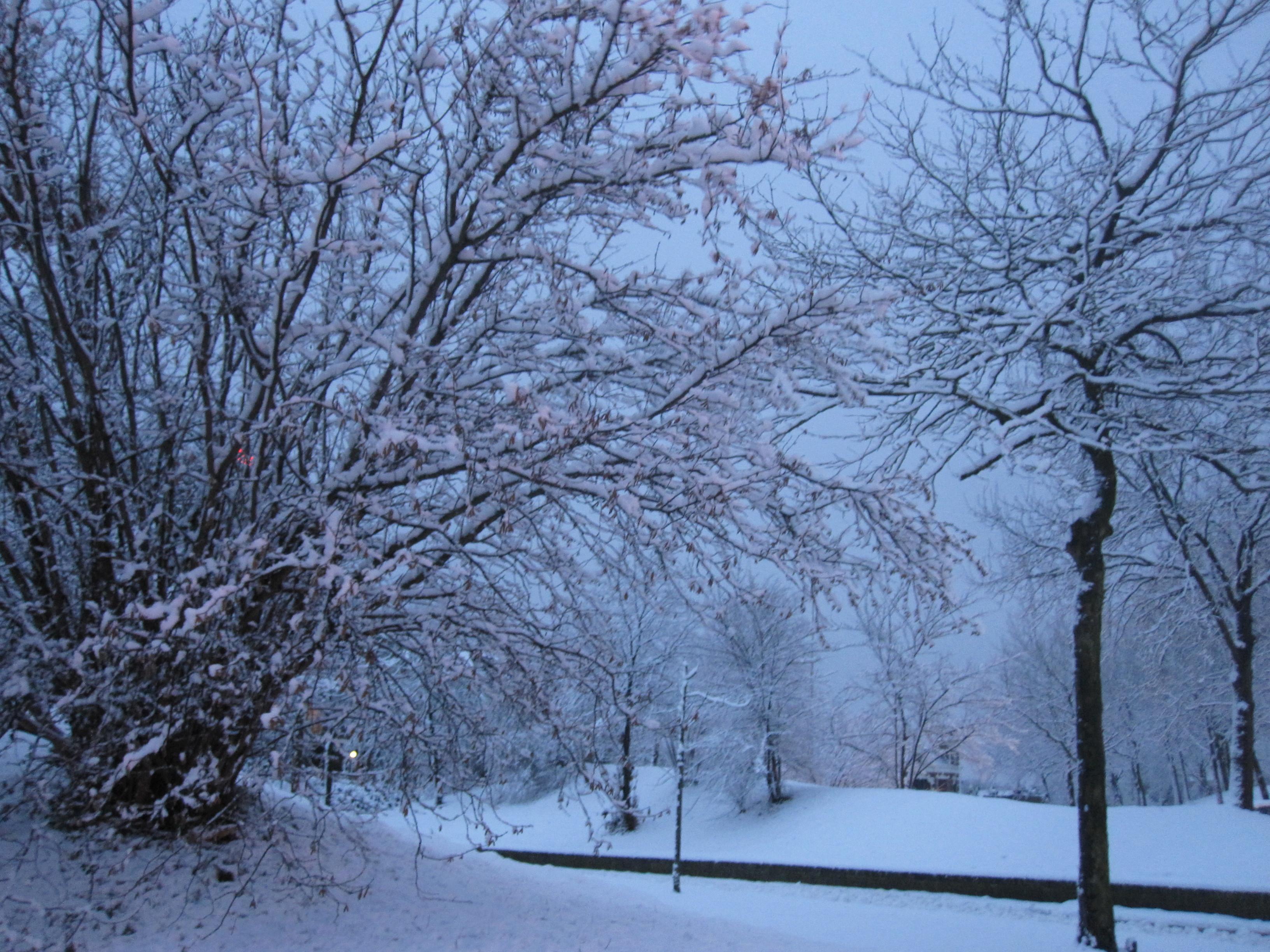 Early winter morning wallpaper 3264x2448