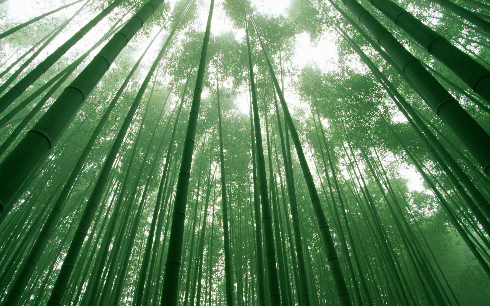 47 Bamboo Forest Japan Computer Wallpaper On