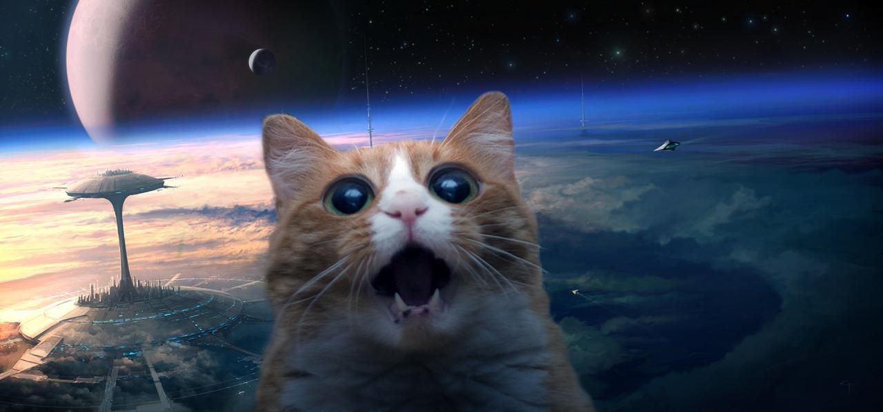 Space cats hd wallpaper wallpapersafari - Space kitty wallpaper ...