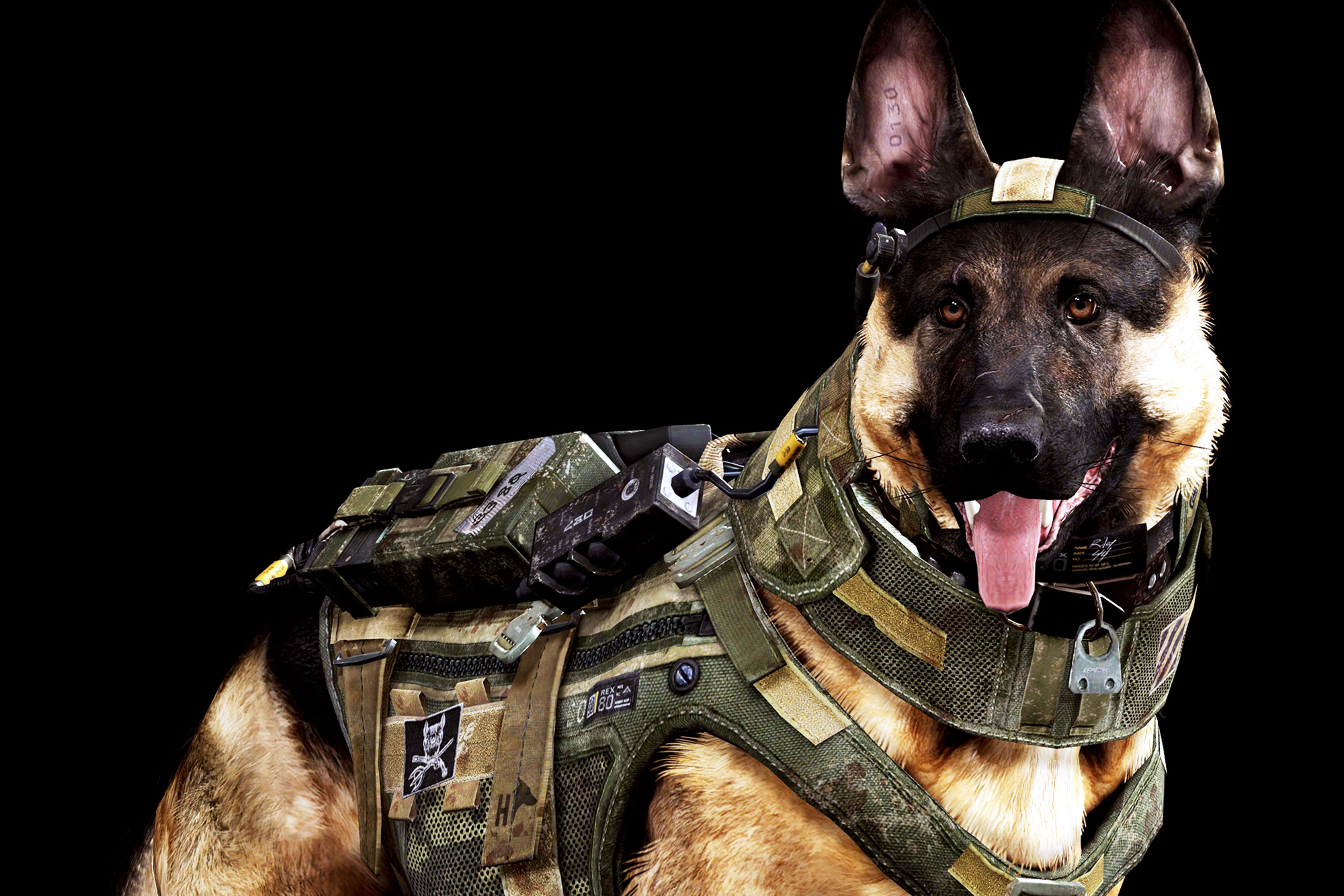 Dog Army Awesome Wallpapers HD 2000x1334