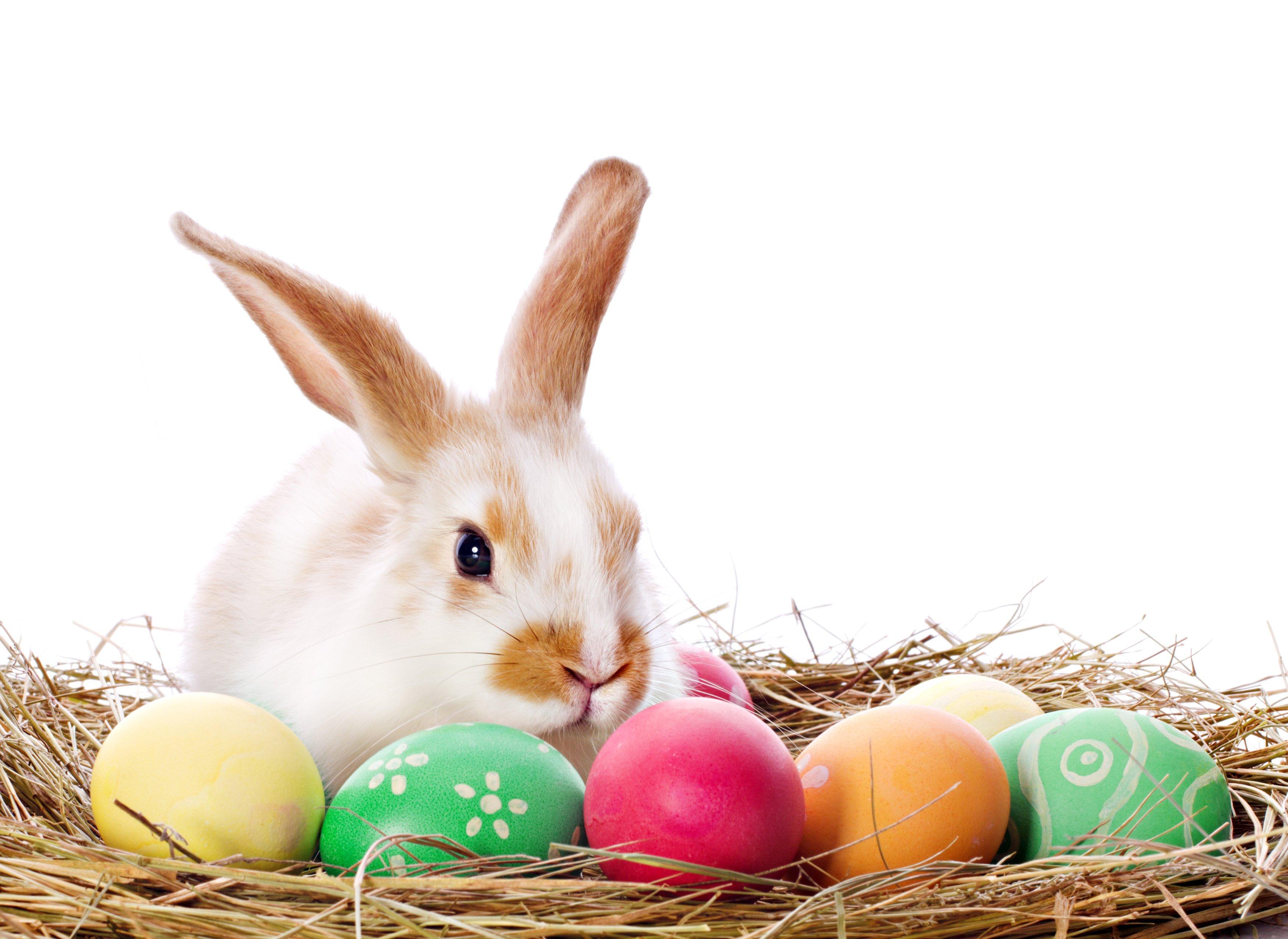 Easter bunny wallpaper wallpapersafari - Easter bunny wallpaper ...