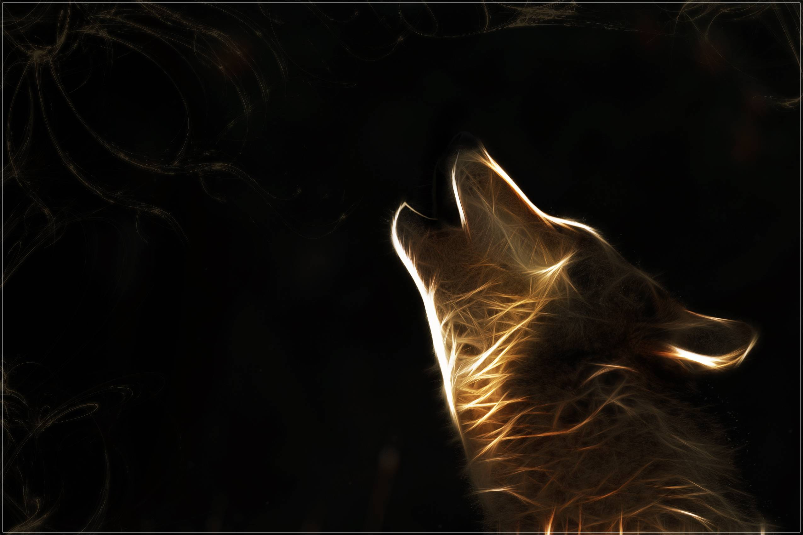 HD Wolf Wallpapers 2550x1699
