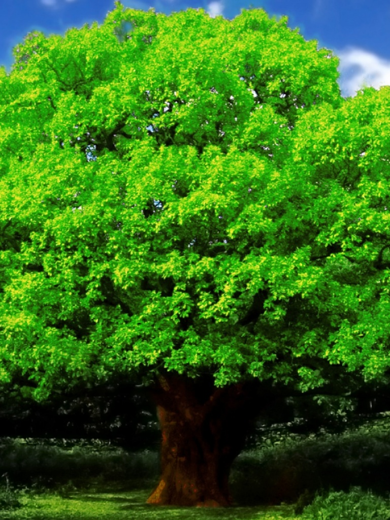 768x1024 Oak Tree Ipad mini wallpaper 768x1024