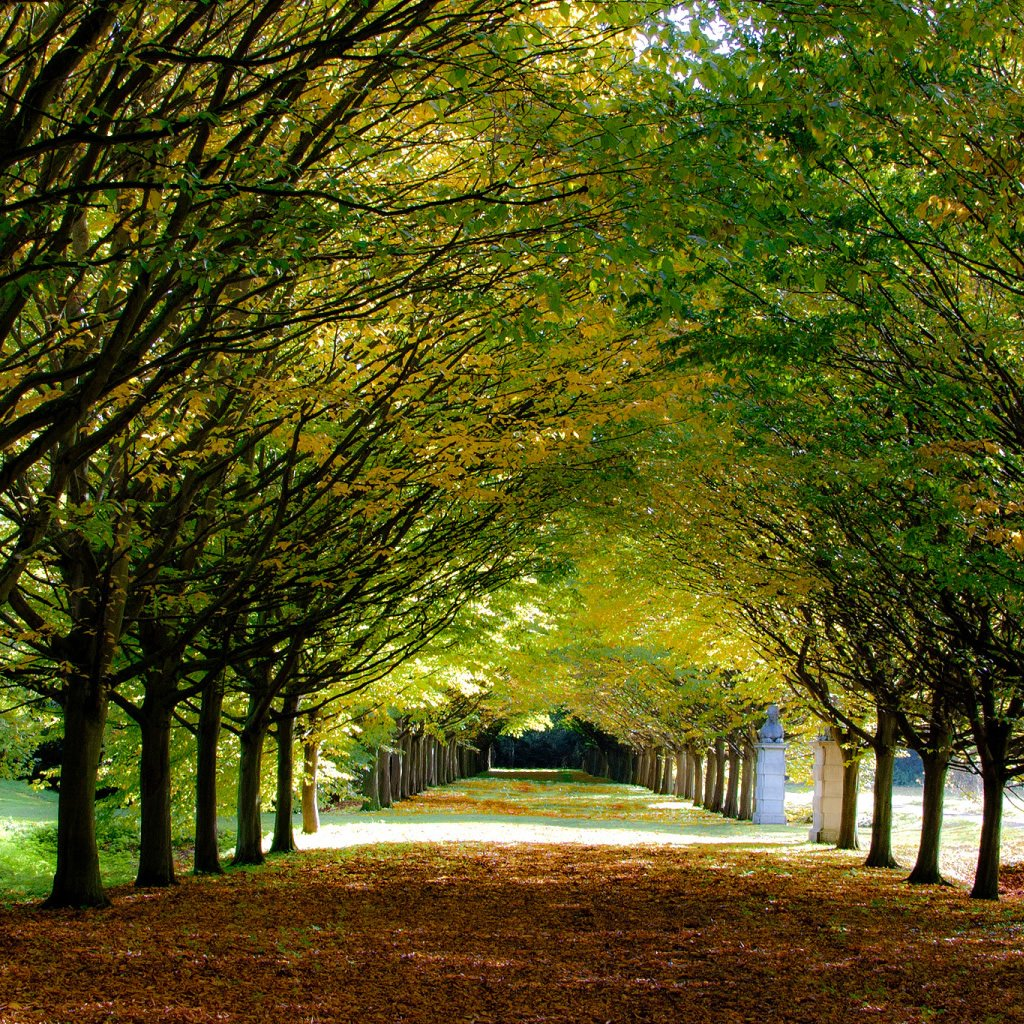 Its Autumn At Anglesey Abbey Cambridgeshire iPad Wallpaper Download 1024x1024