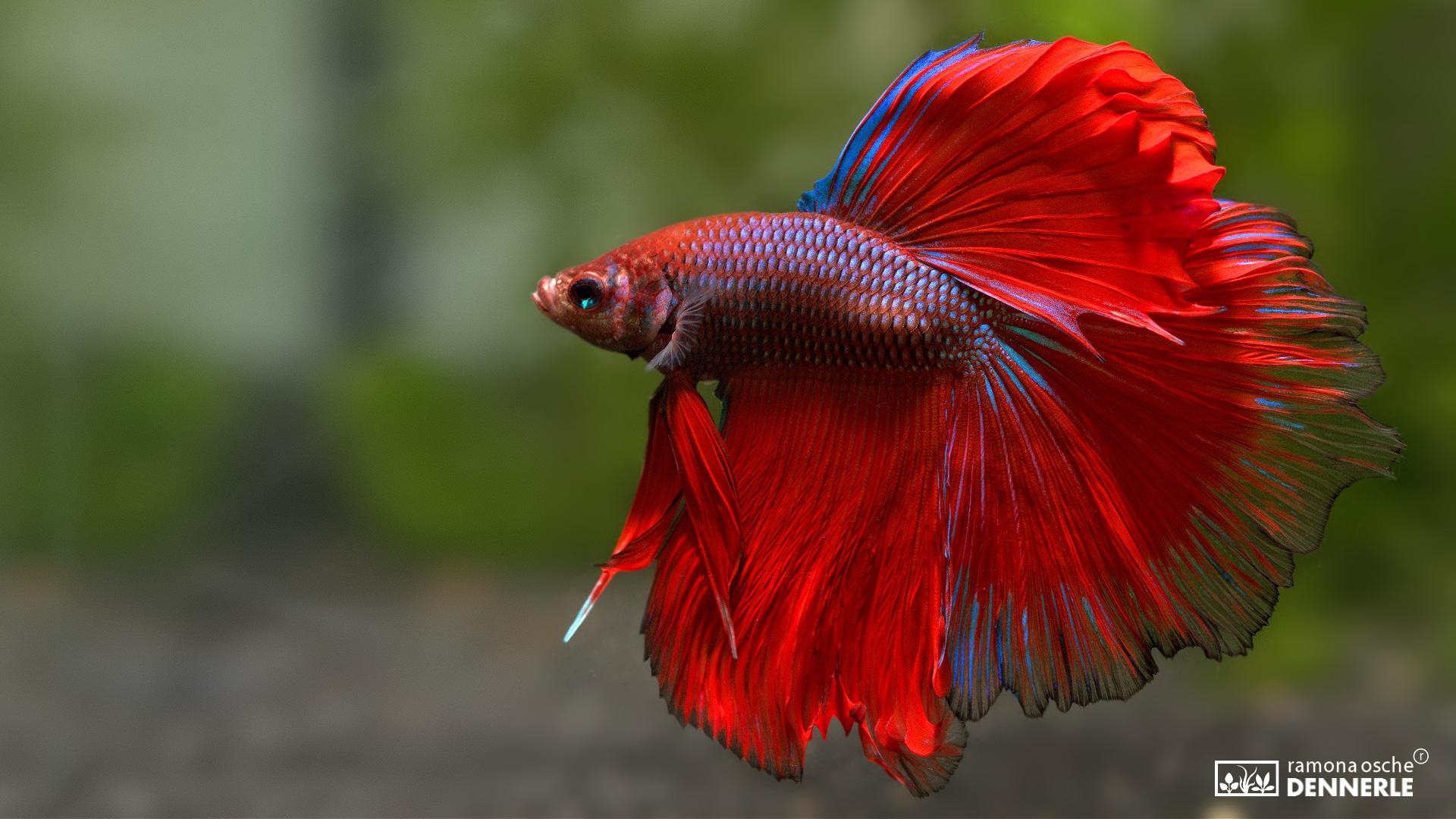Ramona Osche fish natural shots 1920x1080