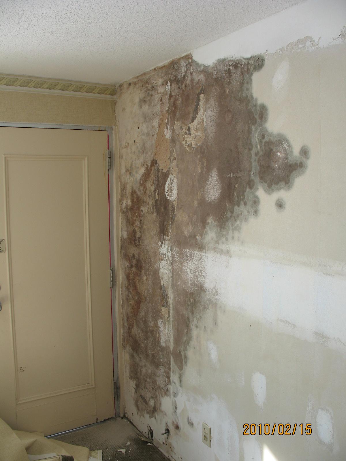 Vinyl Wallpaper And Mold Wallpapersafari