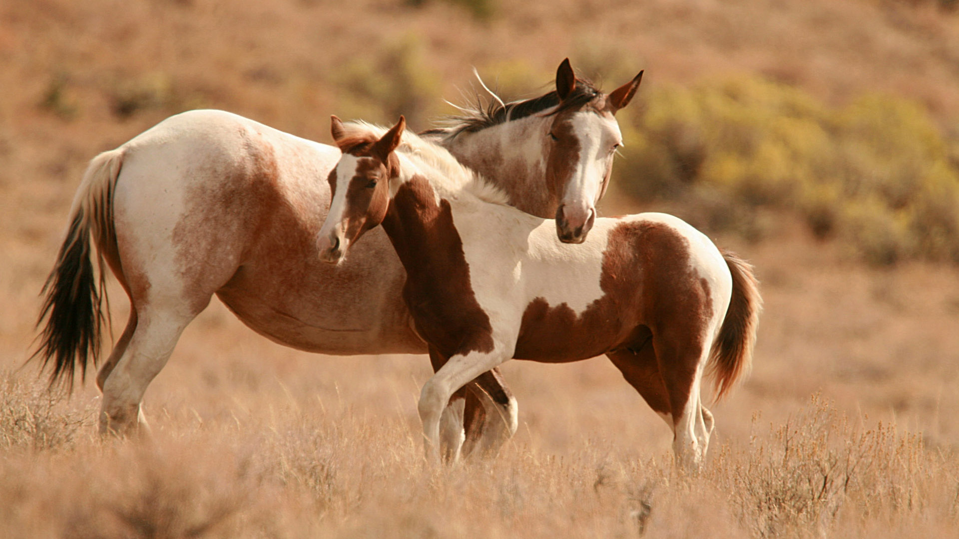 wallpaper brown and white horse HD wallpaper Background wallpaper 1920x1080