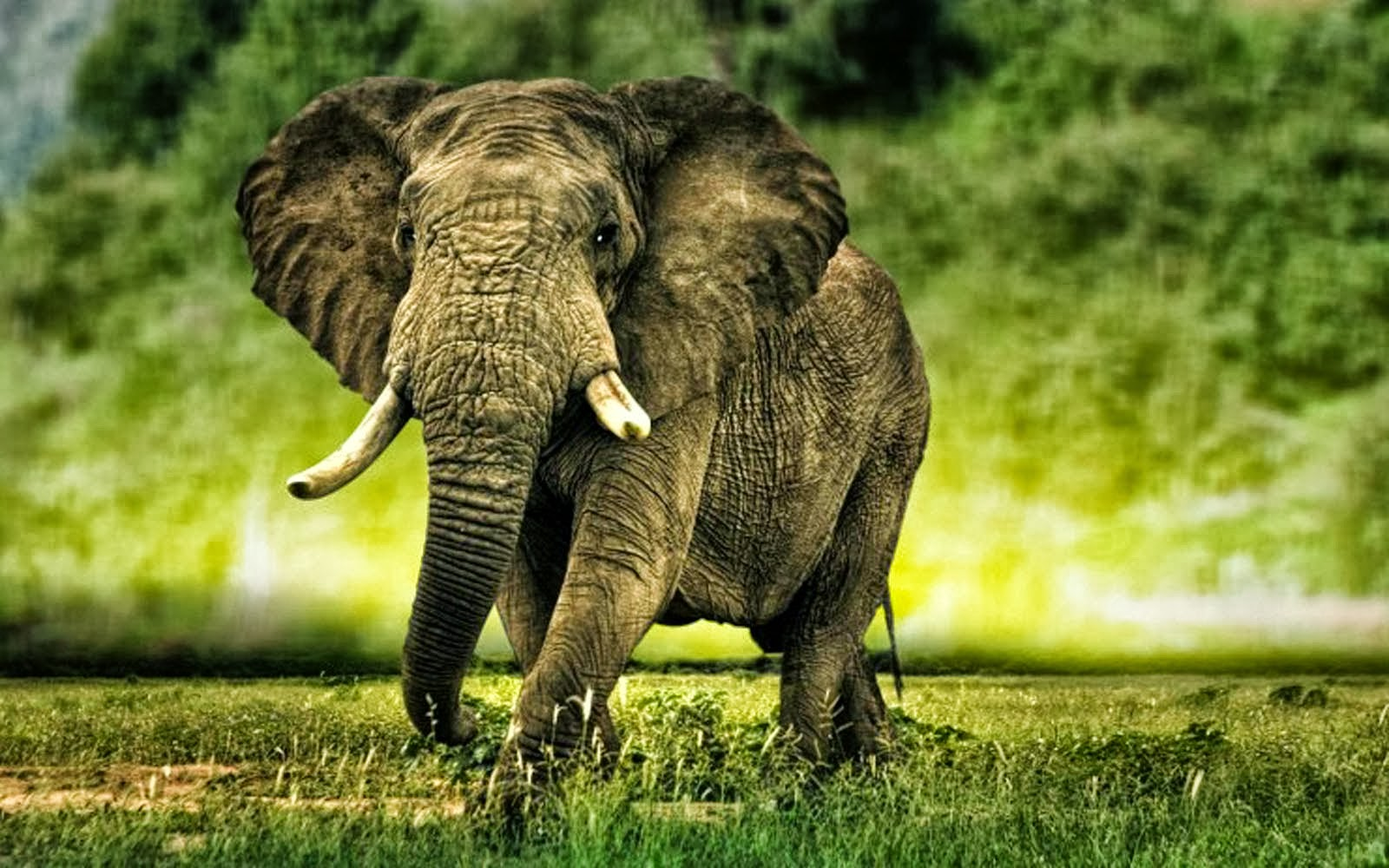Beautiful Pictures Of Elephant In Hd: HD Elephant Wallpaper