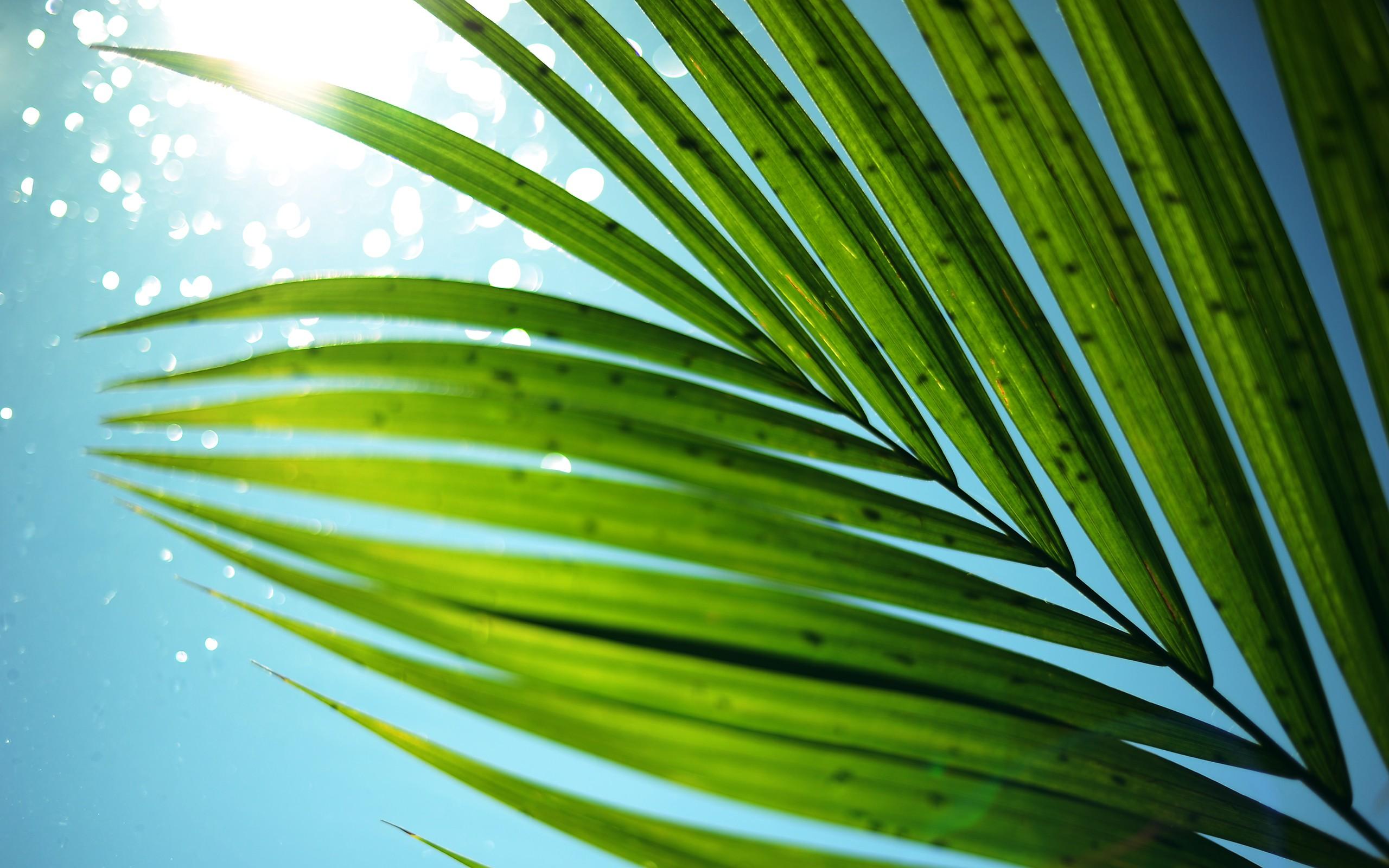 Majestisc Palm Tree Leaf widescreen wallpaper Wide WallpapersNET 2560x1600