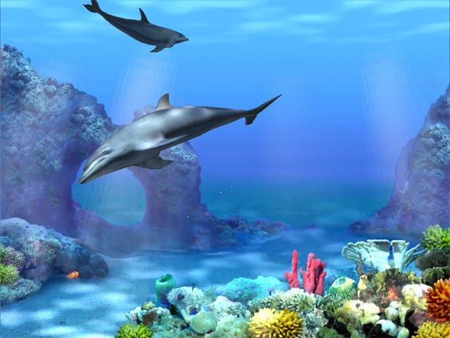 Living 3D Dolphins screensaver 640x480