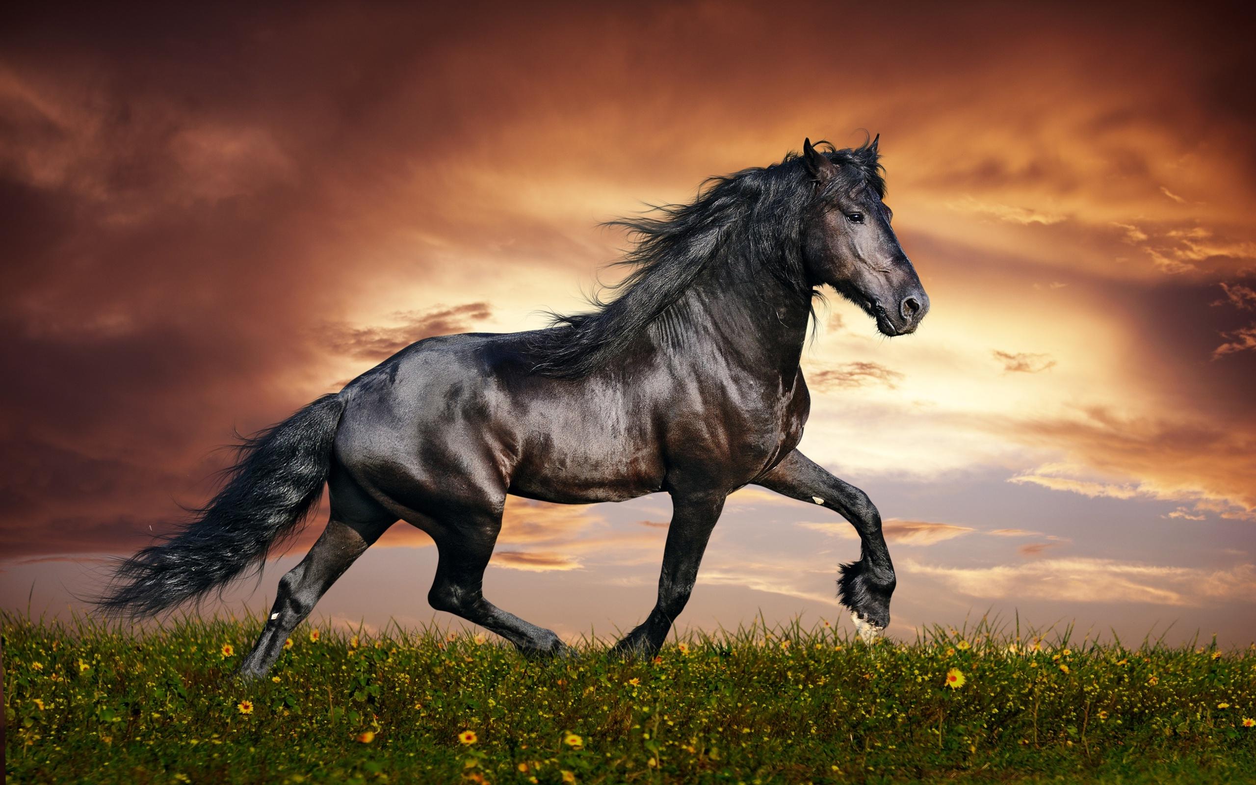 Horse Wallpaper Downloads 10268 Wallpaper 2560x1600