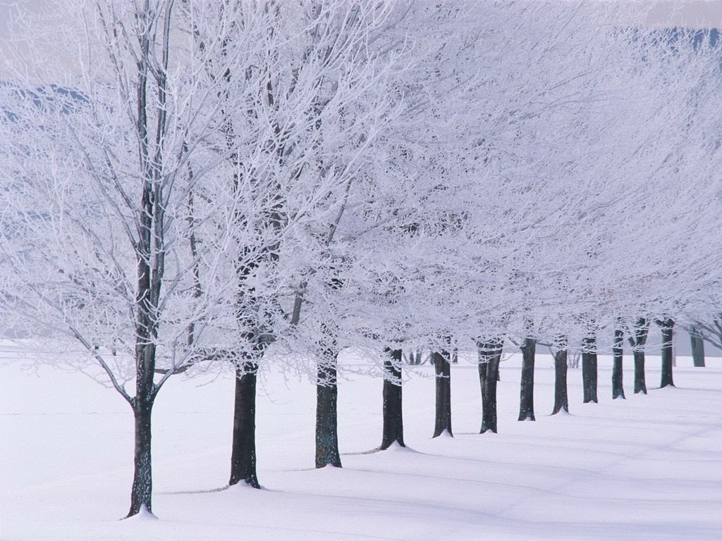 Blizzard Snow Wallpaper 1024x768