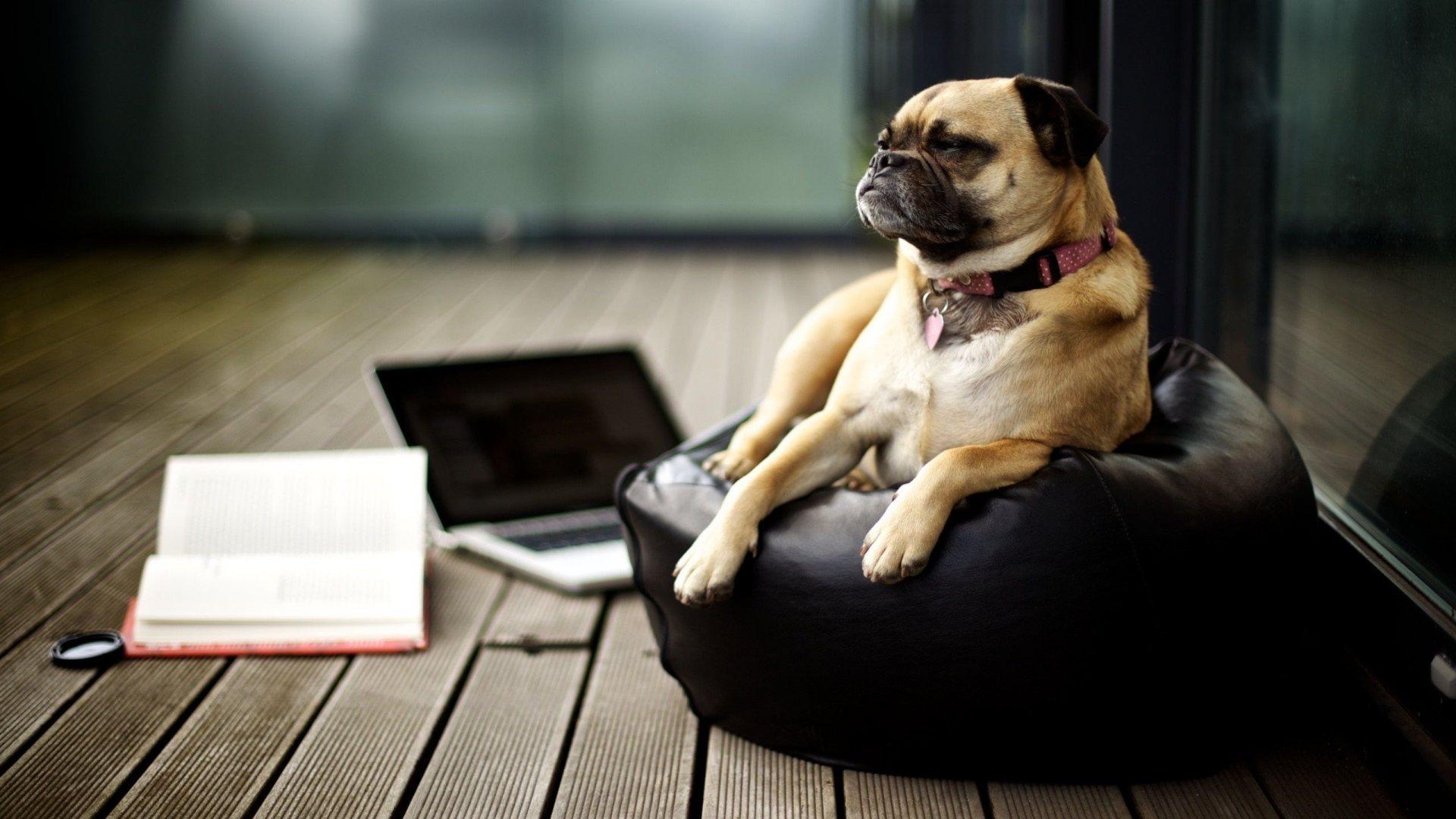Business Dog Full HD Desktop Wallpapers 1080p 1920x1080