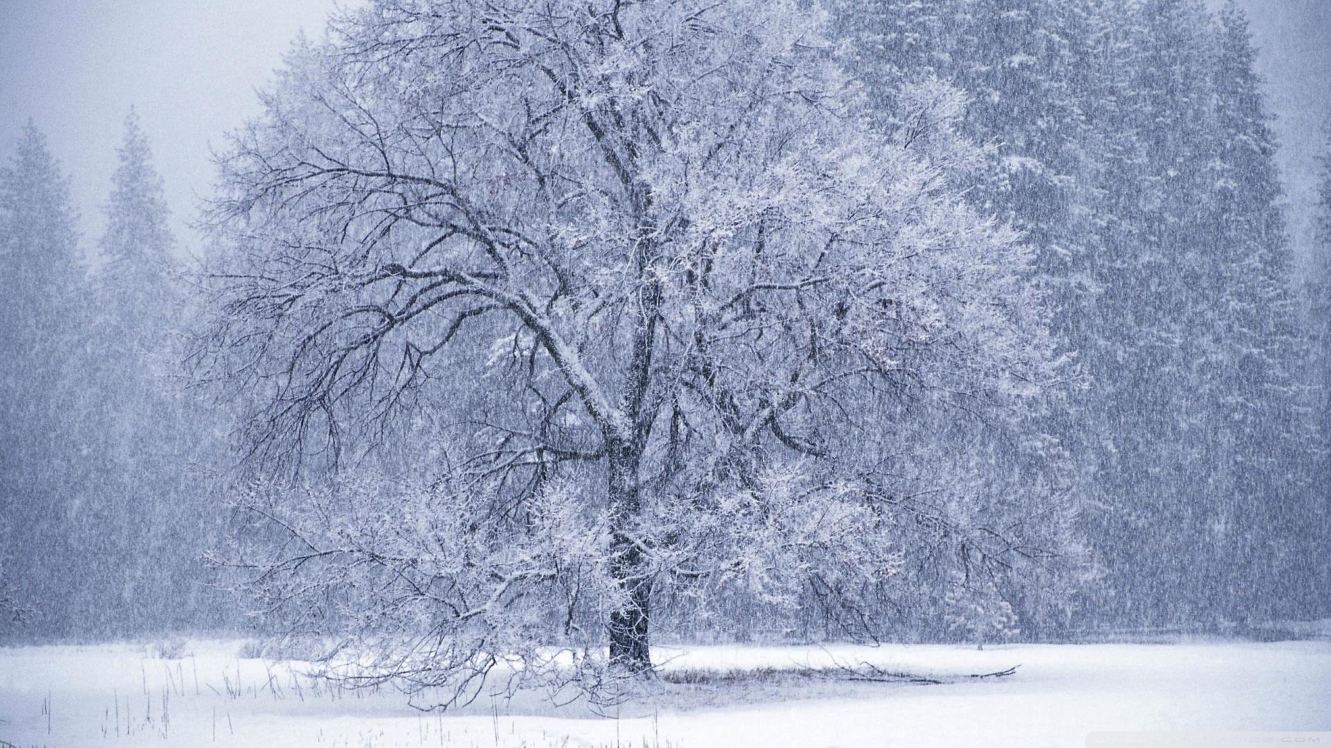 Snow Falling Wallpaper 1920x1080 Snow Falling 1920x1080
