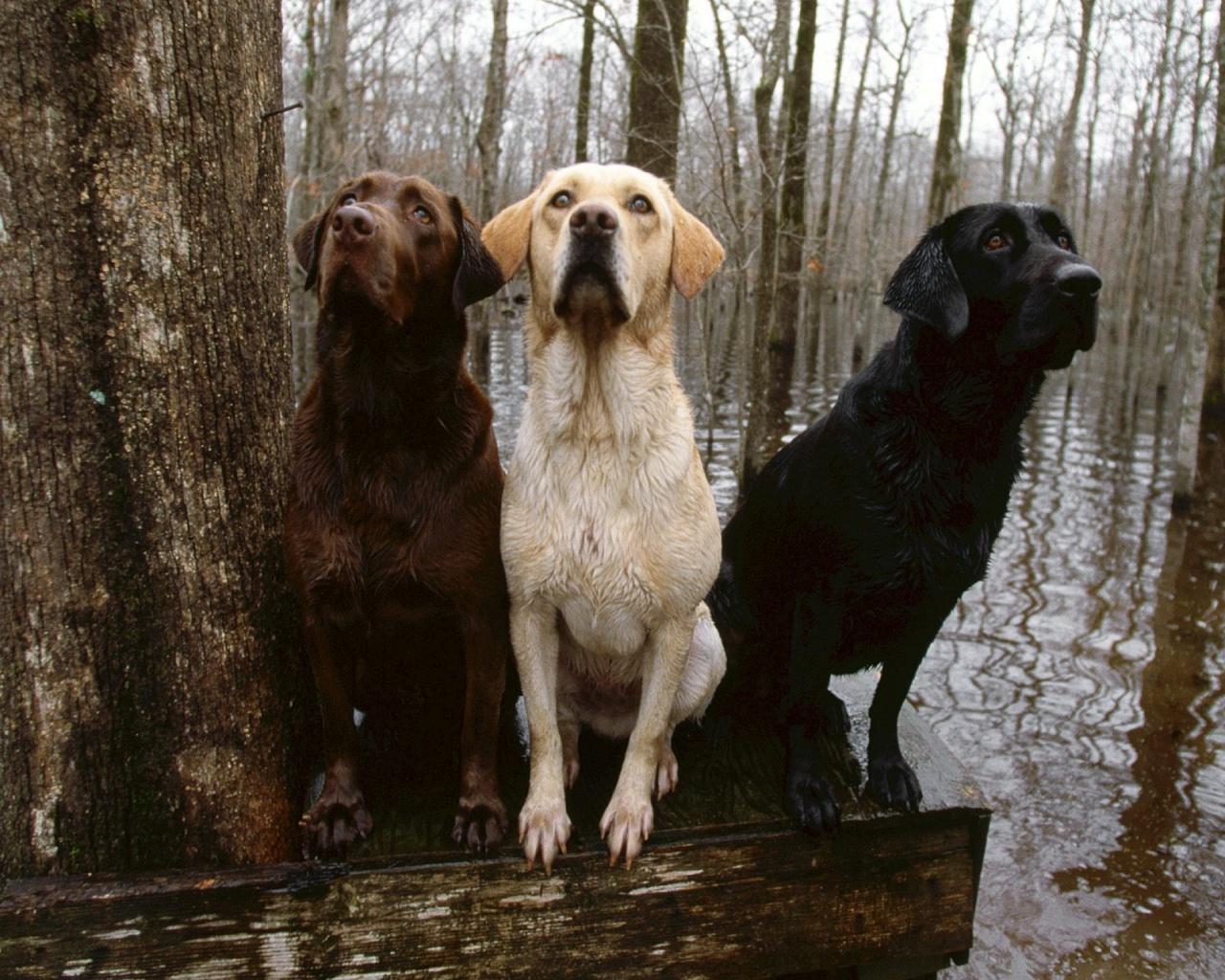 hunting dog wallpaper - wallpapersafari