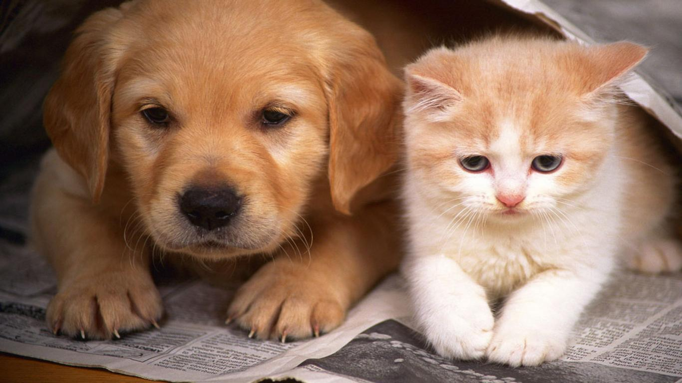 Free Download Cats And Dogs Wallpaper Hd Cats And Dogs Wallpaper Hd Cute Dog And 1366x768 For Your Desktop Mobile Tablet Explore 45 Adorable Cat And Dog Wallpaper Adorable