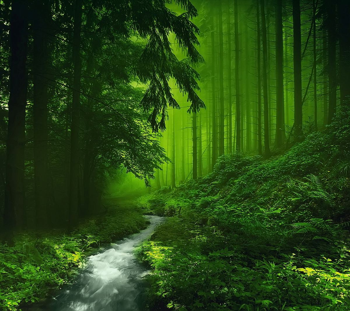 Green Forest Wallpaper HD