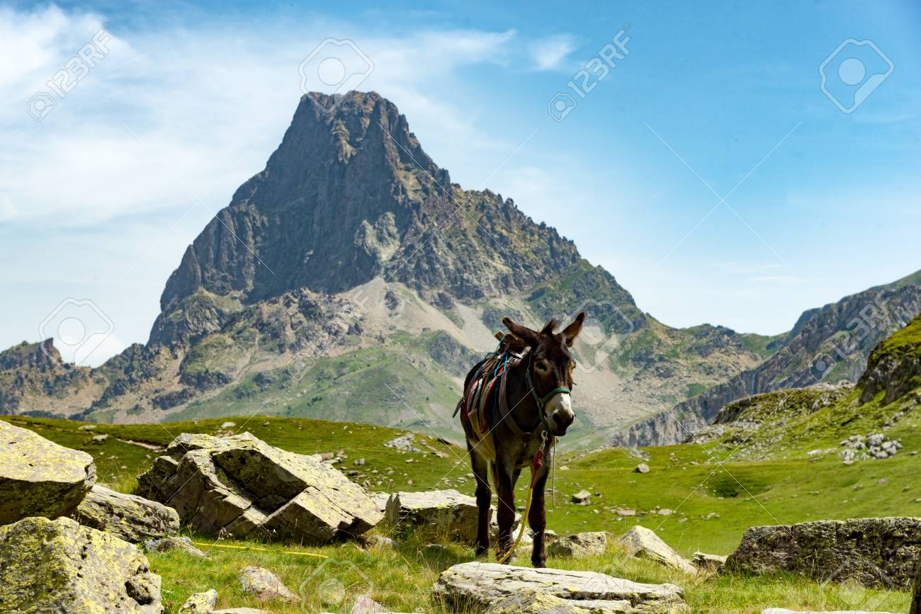 A Donkey With The Pic Du Midi DOssau In The French Pyrenees 1300x867