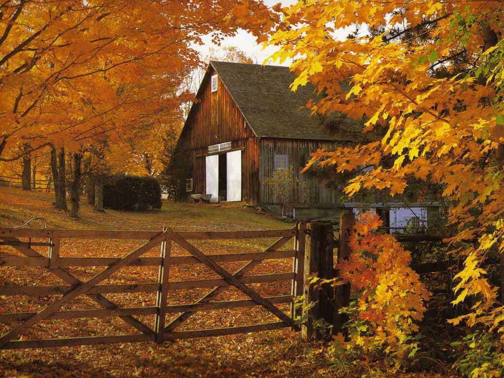 URL httphd wallpapercomfall of autumn leaves desktop wallpaper 1024x768