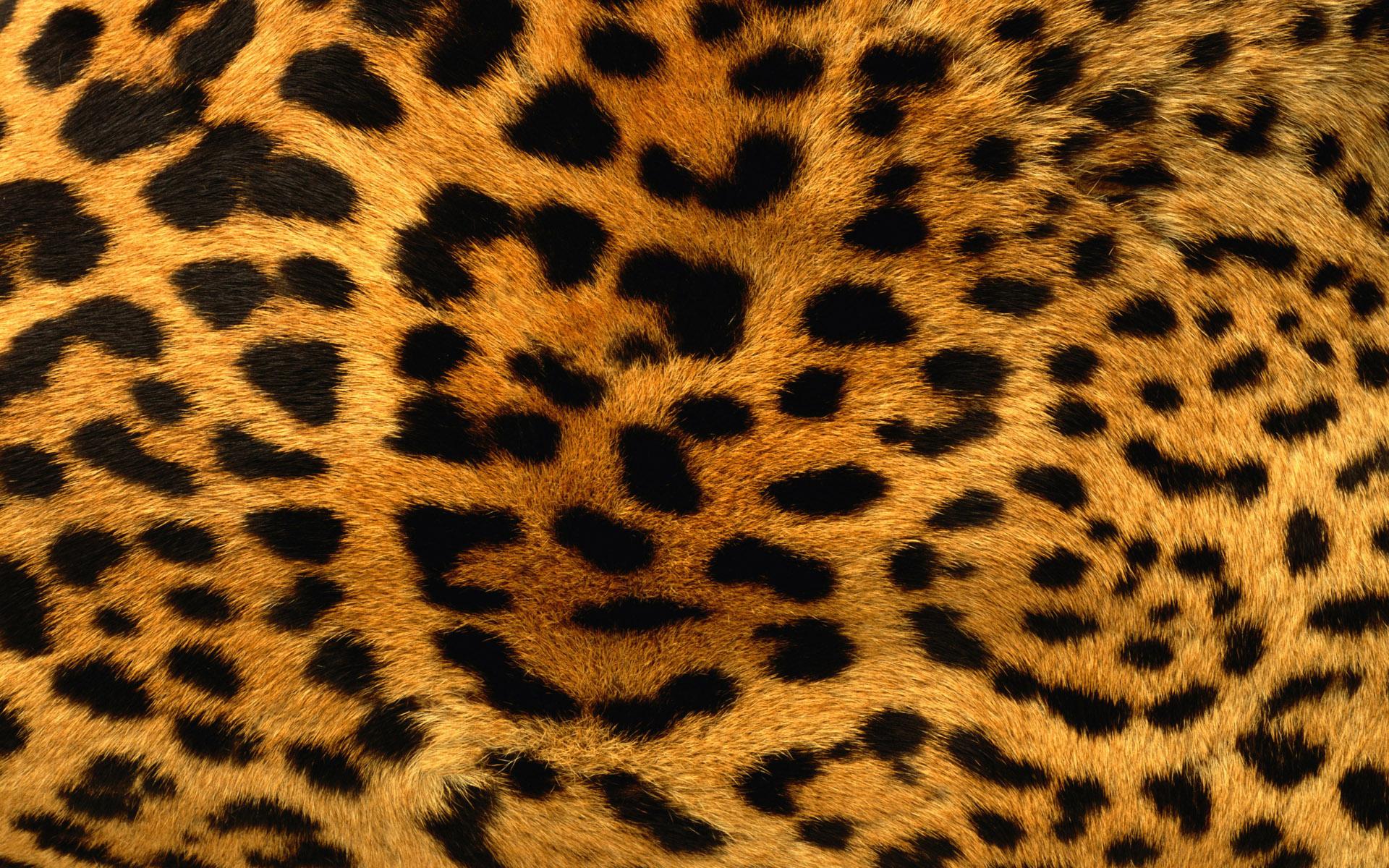 Leopard Print Wallpapers Leopard Print Myspace Backgrounds Leopard 1920x1200