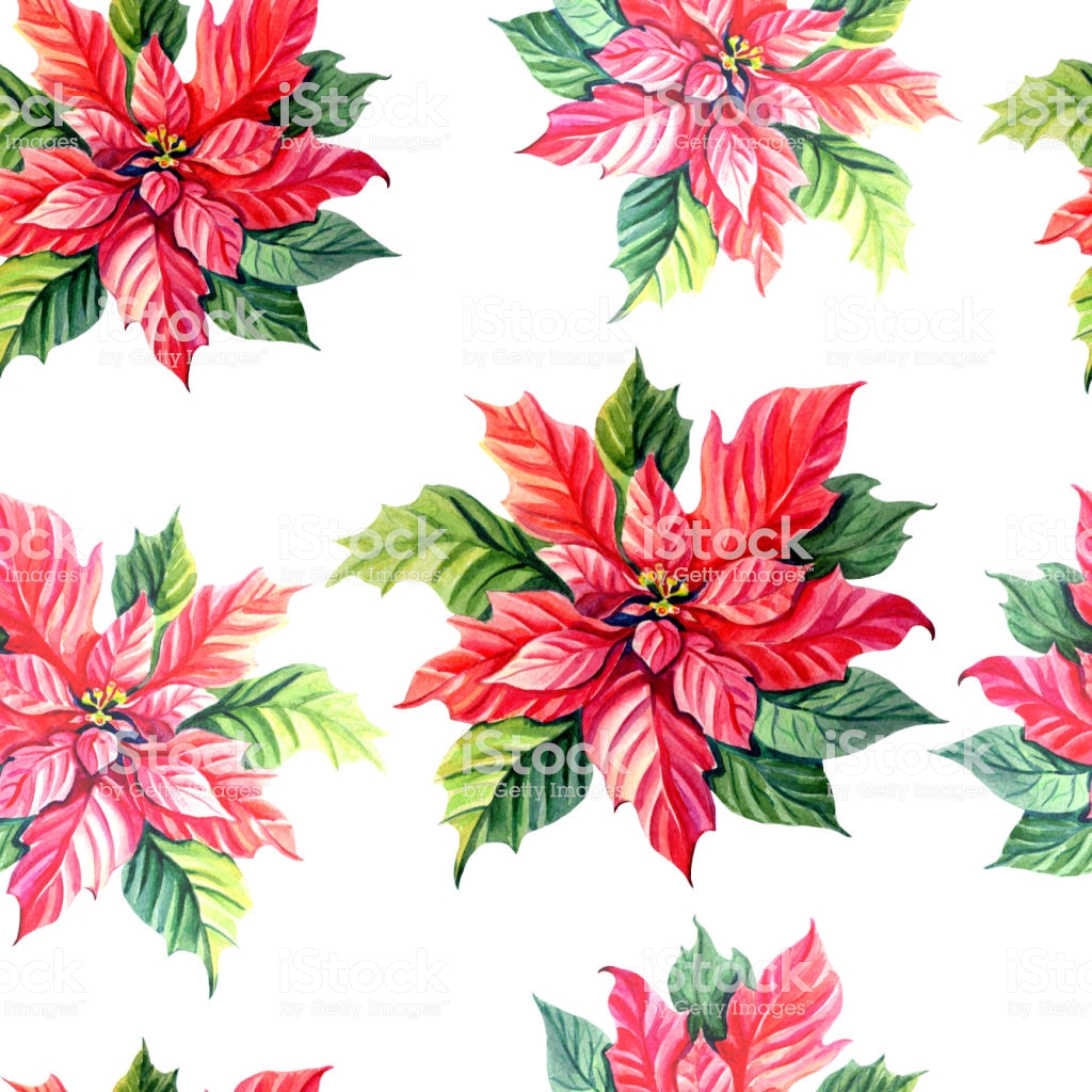Watercolor Poinsettia Green Twig On A White Background Stock 1024x1024