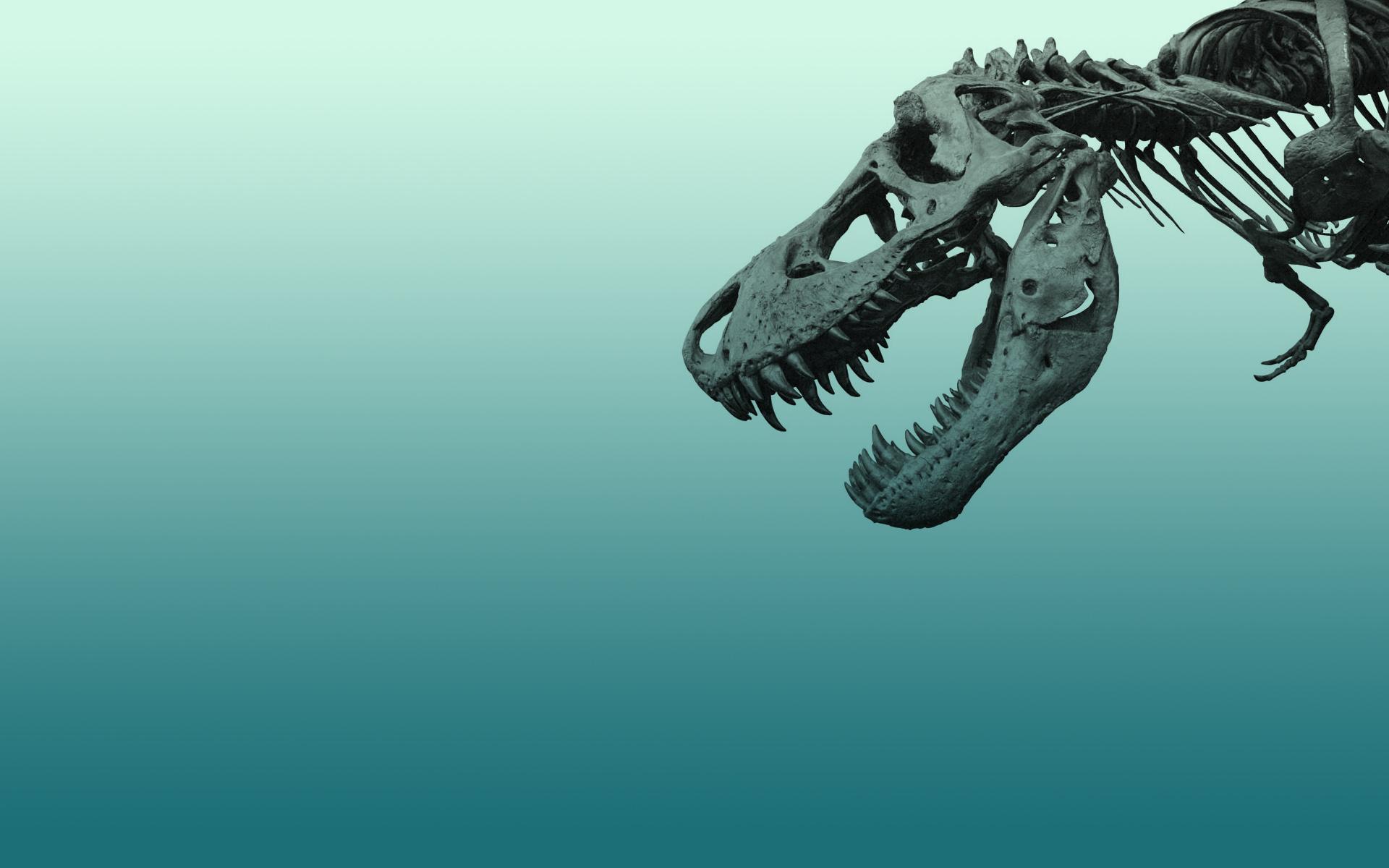 Dinosaur Wallpaper 2 T Rex Skeleton 1920x1200